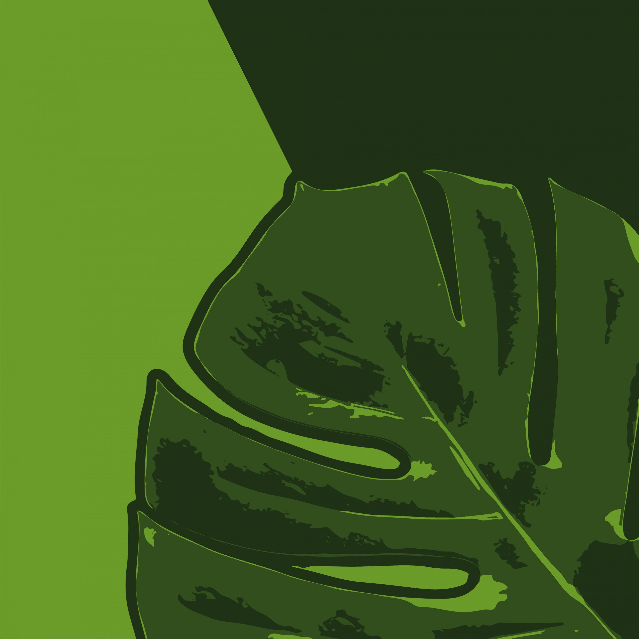Green leaf of a plant