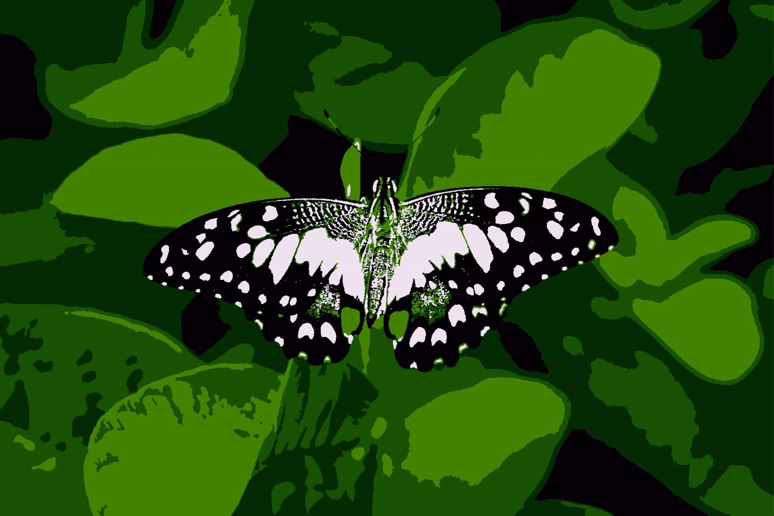 Illustration of Butterfly on the plant