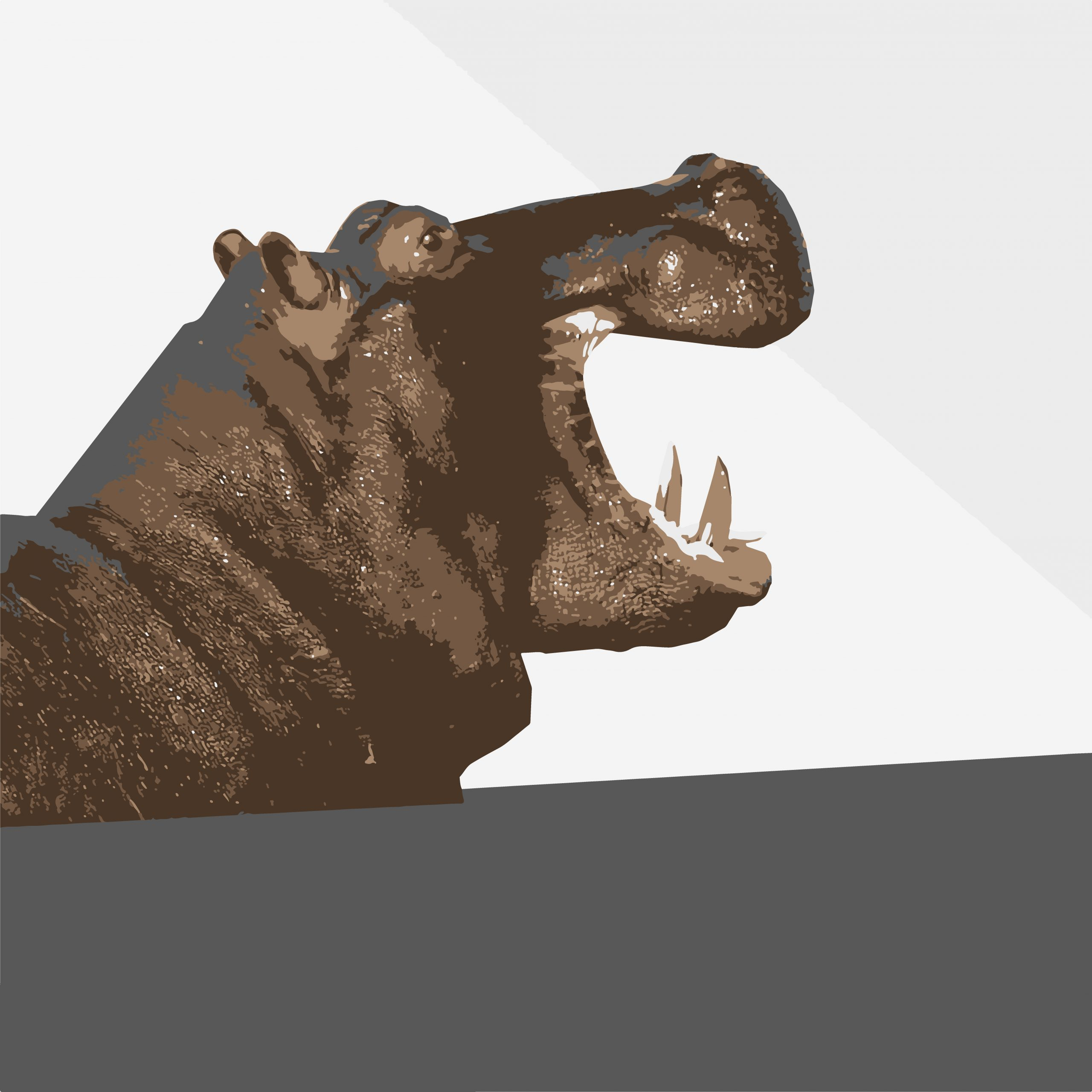 Hippopotamus jaws illustration