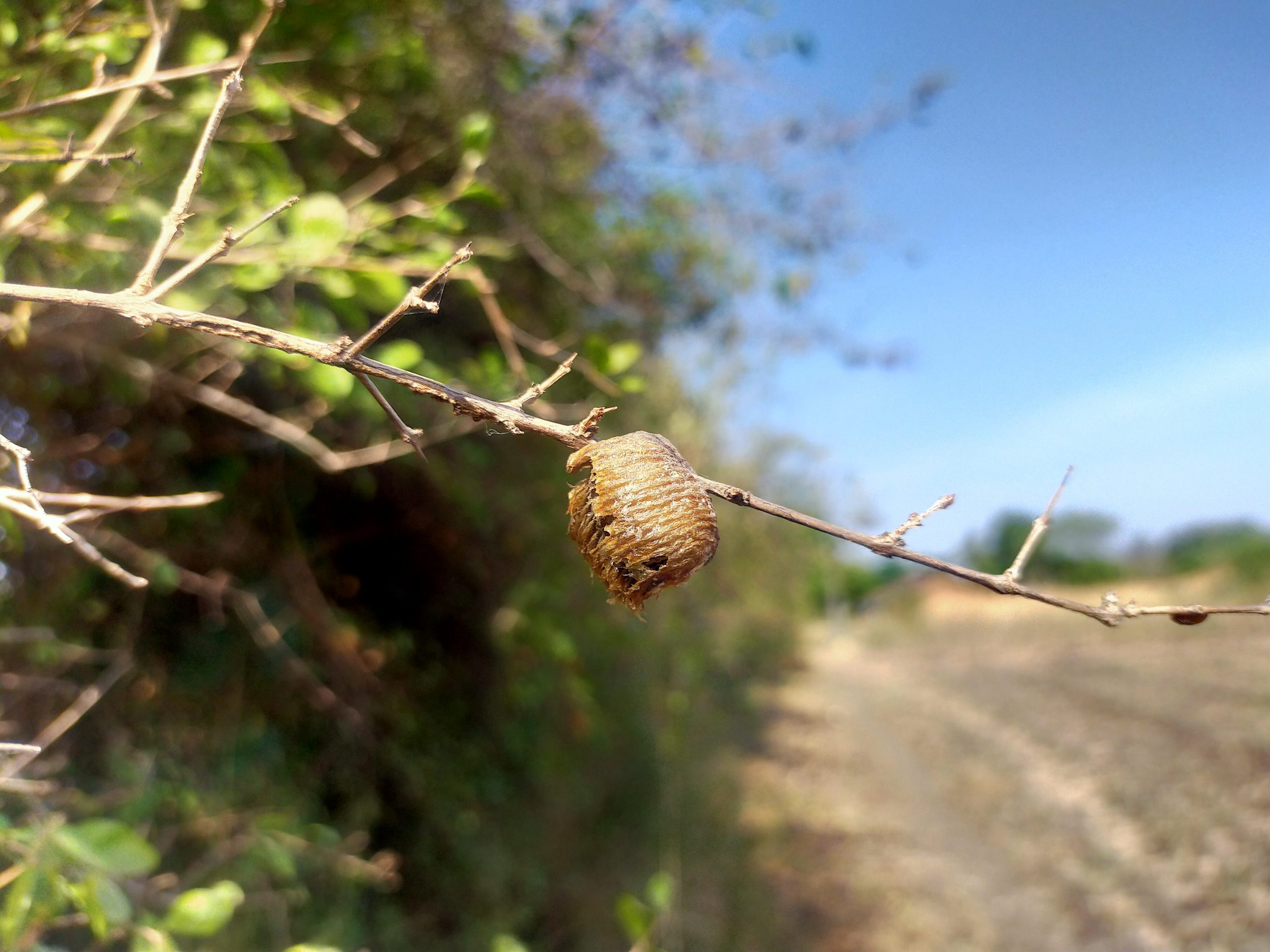 Insect Nest on plant