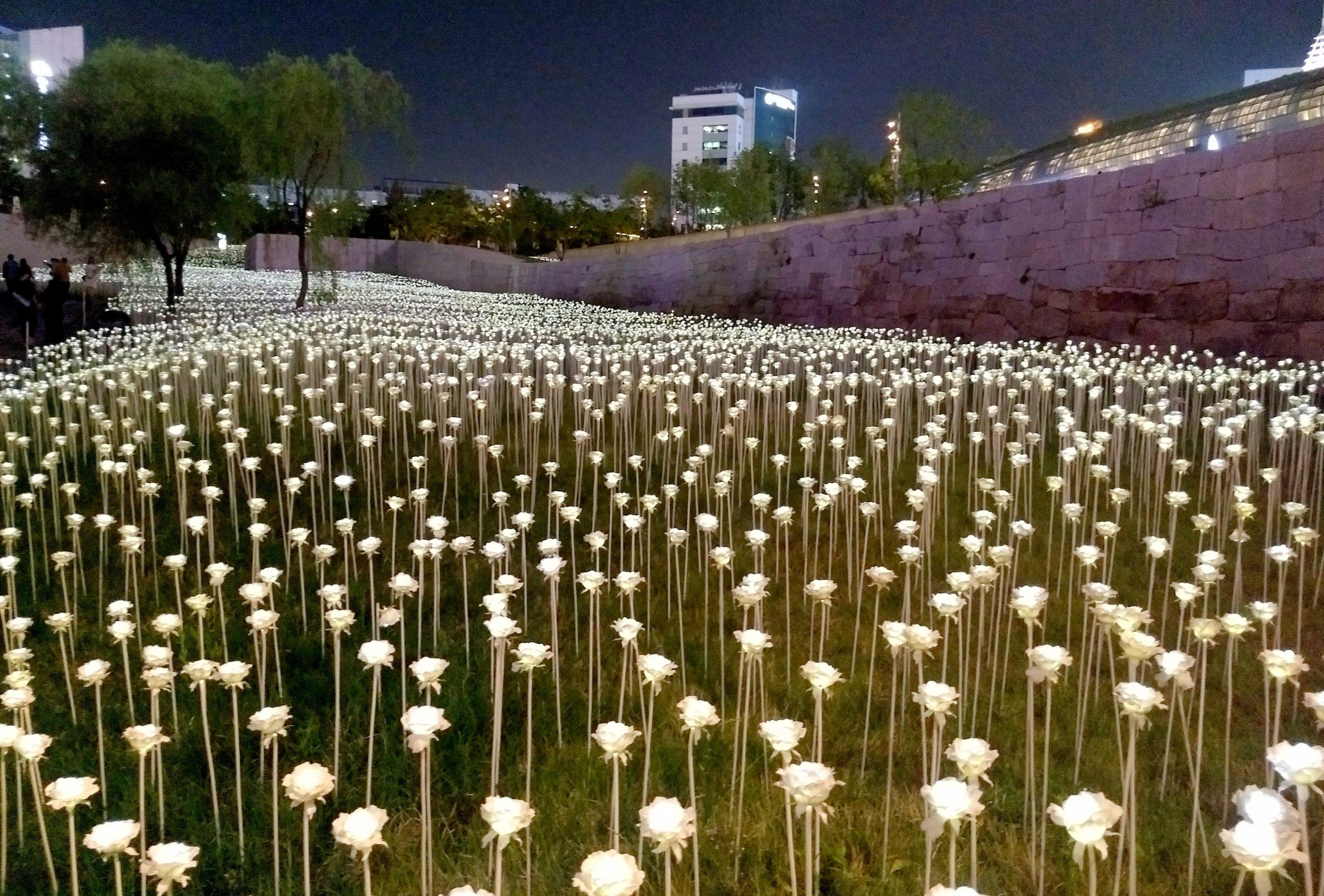 LED Rose garden in South Korea