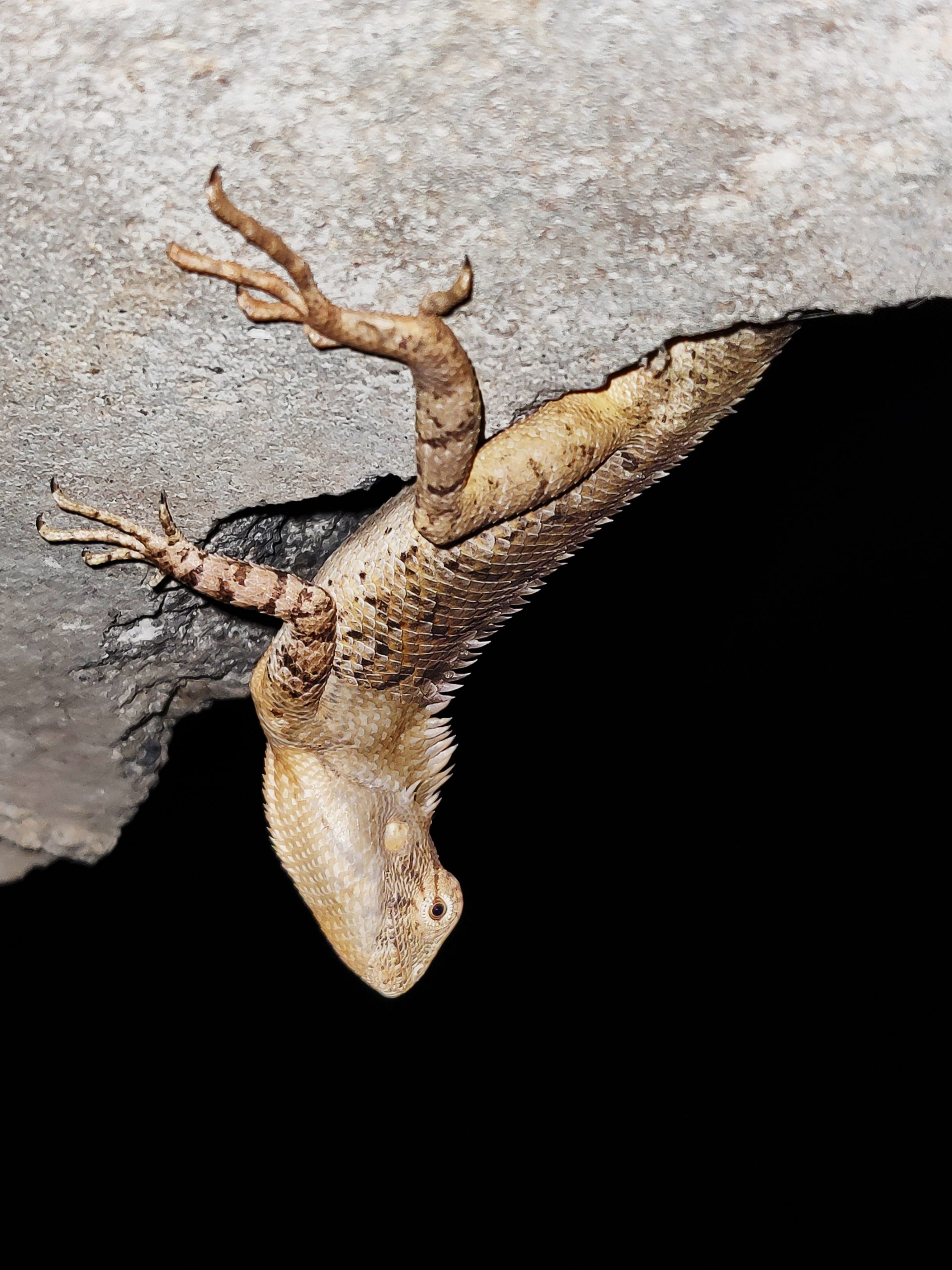 Lizard on the rock