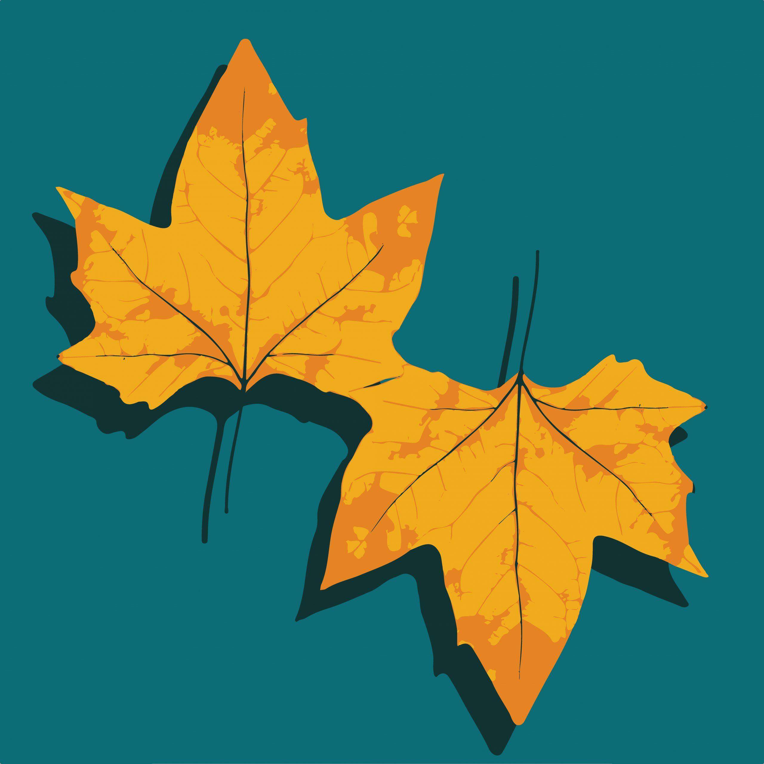 Maple leaves illustration