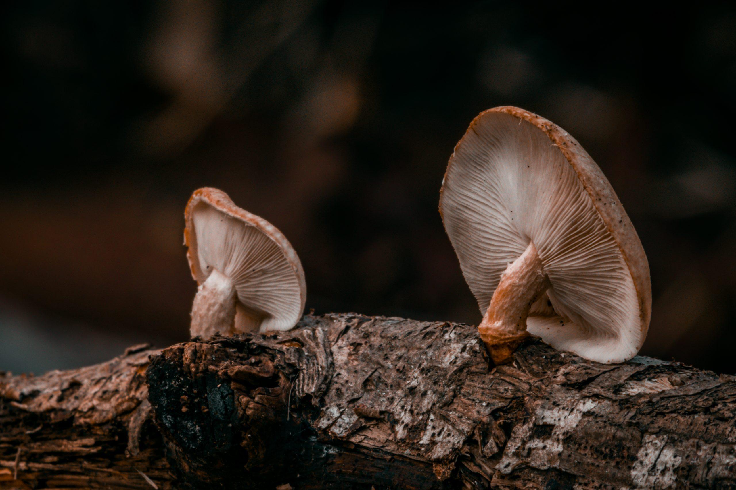 Mushroom growing on a tree bark
