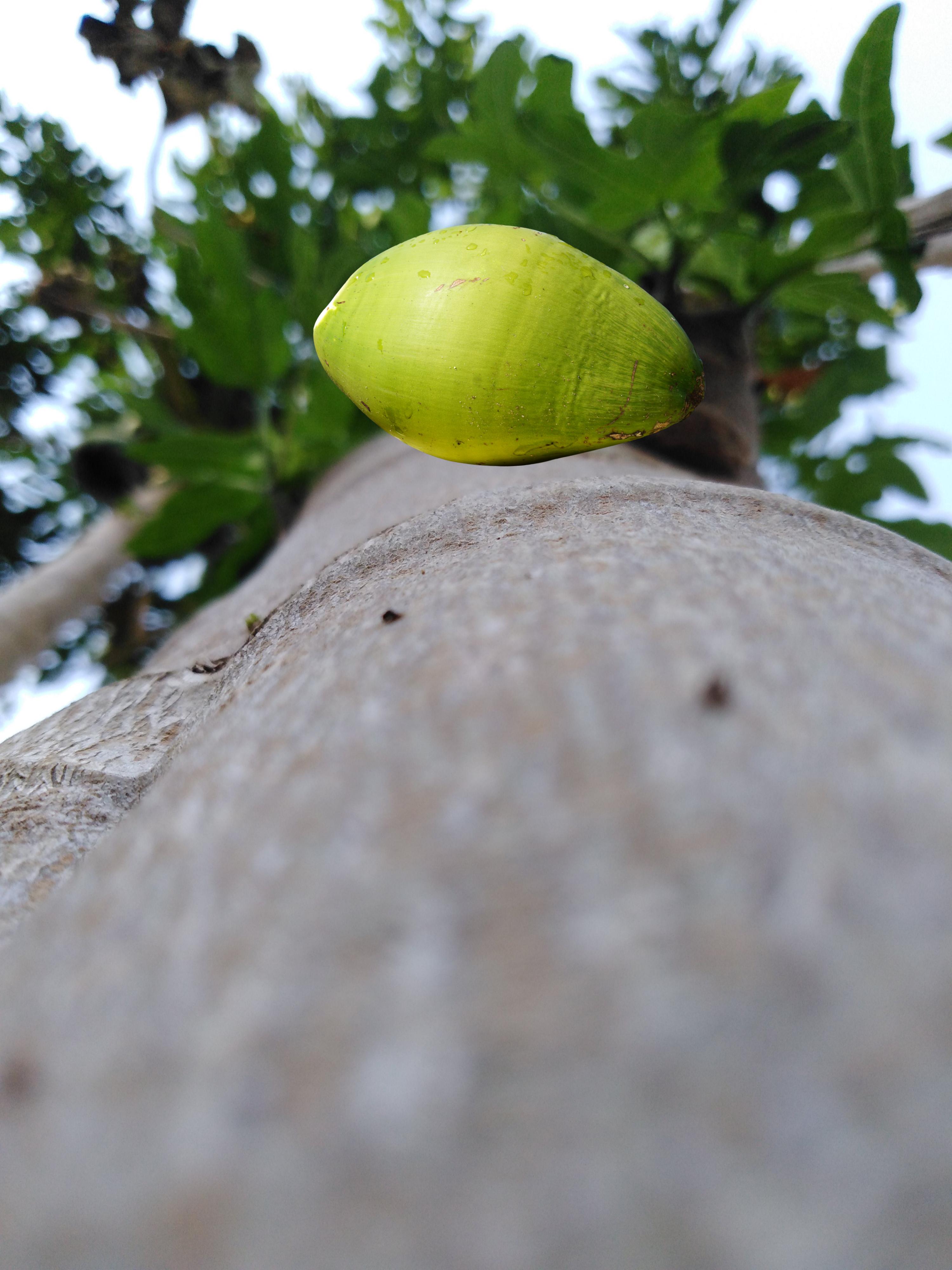 A falling fruit