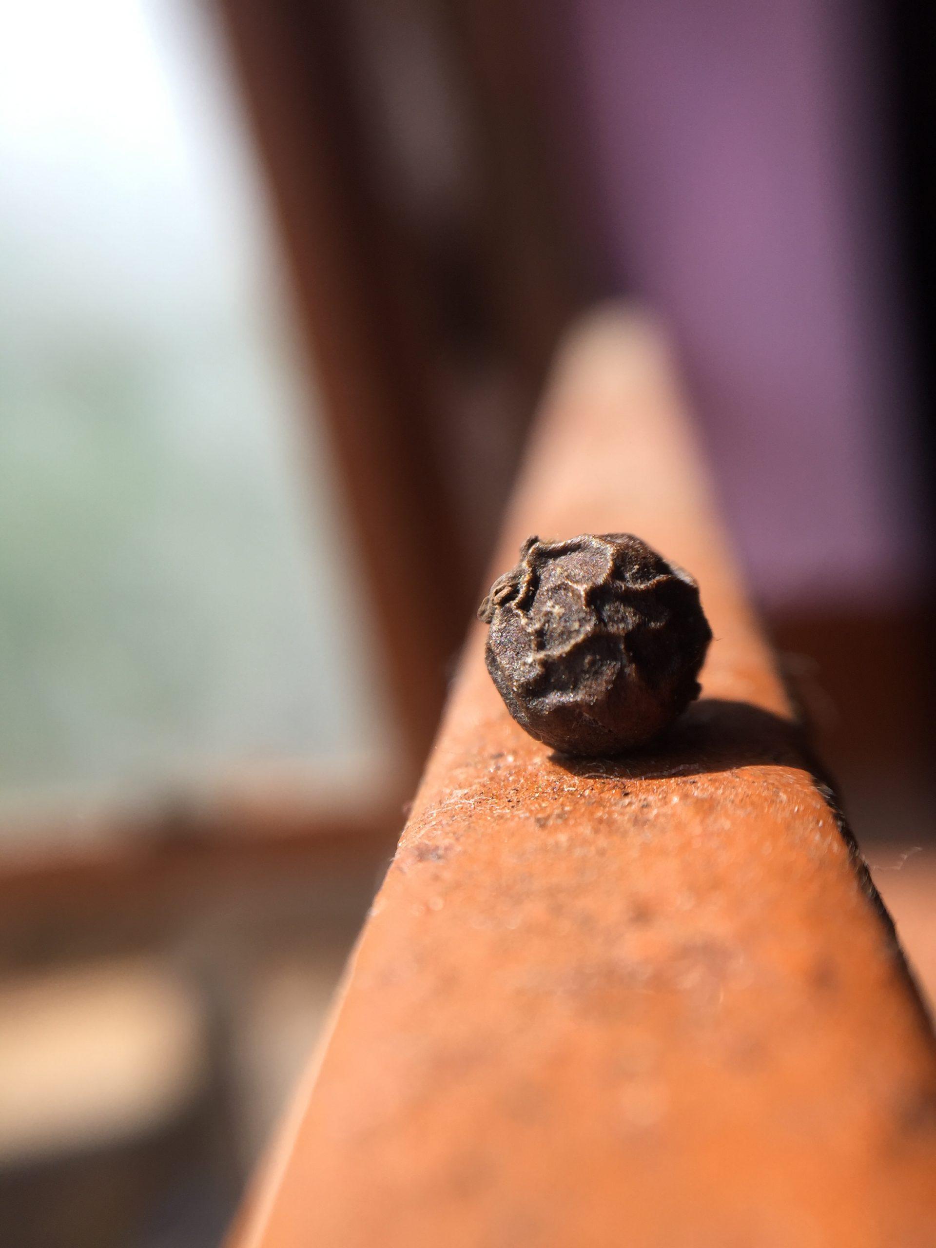 Piece of black pepper