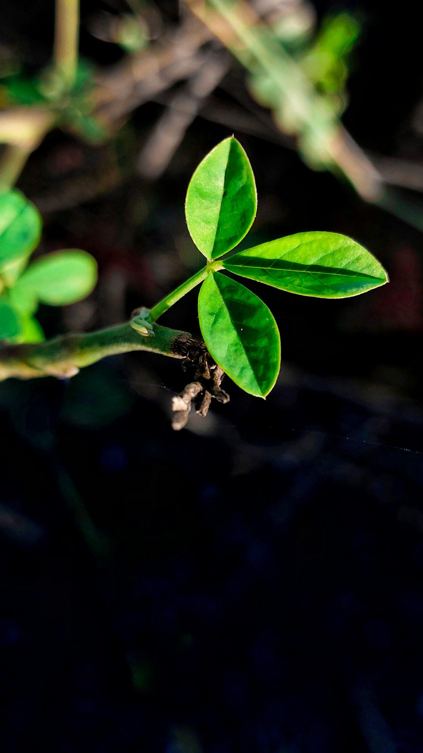 Plant leaves on plant