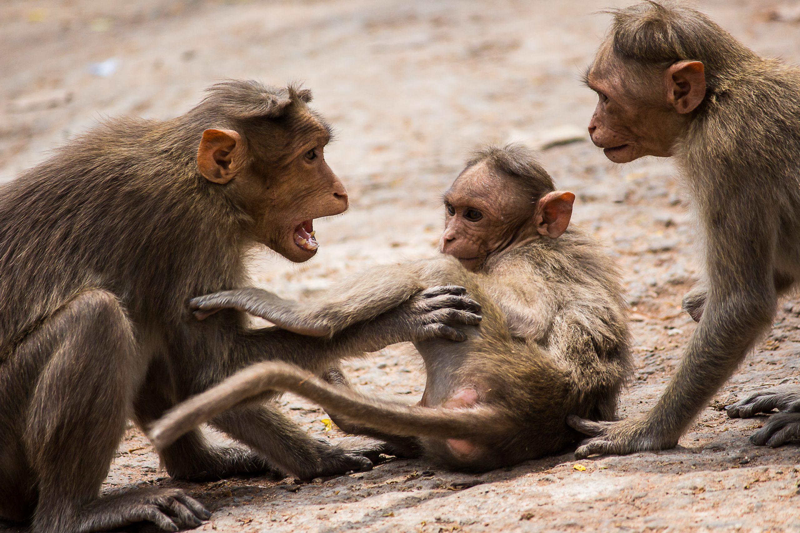Landscape of group of monkeys