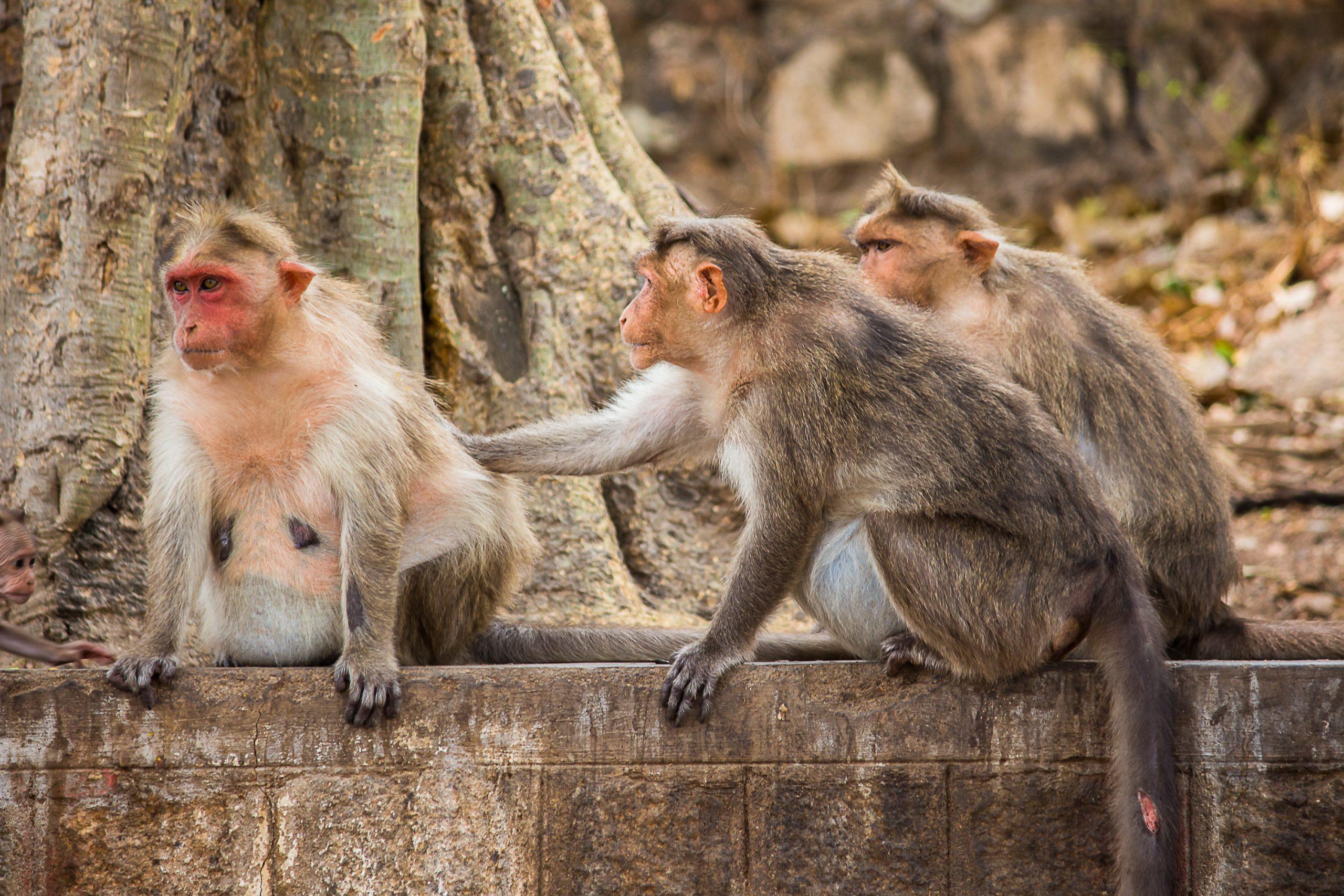 Portrait of monkeys