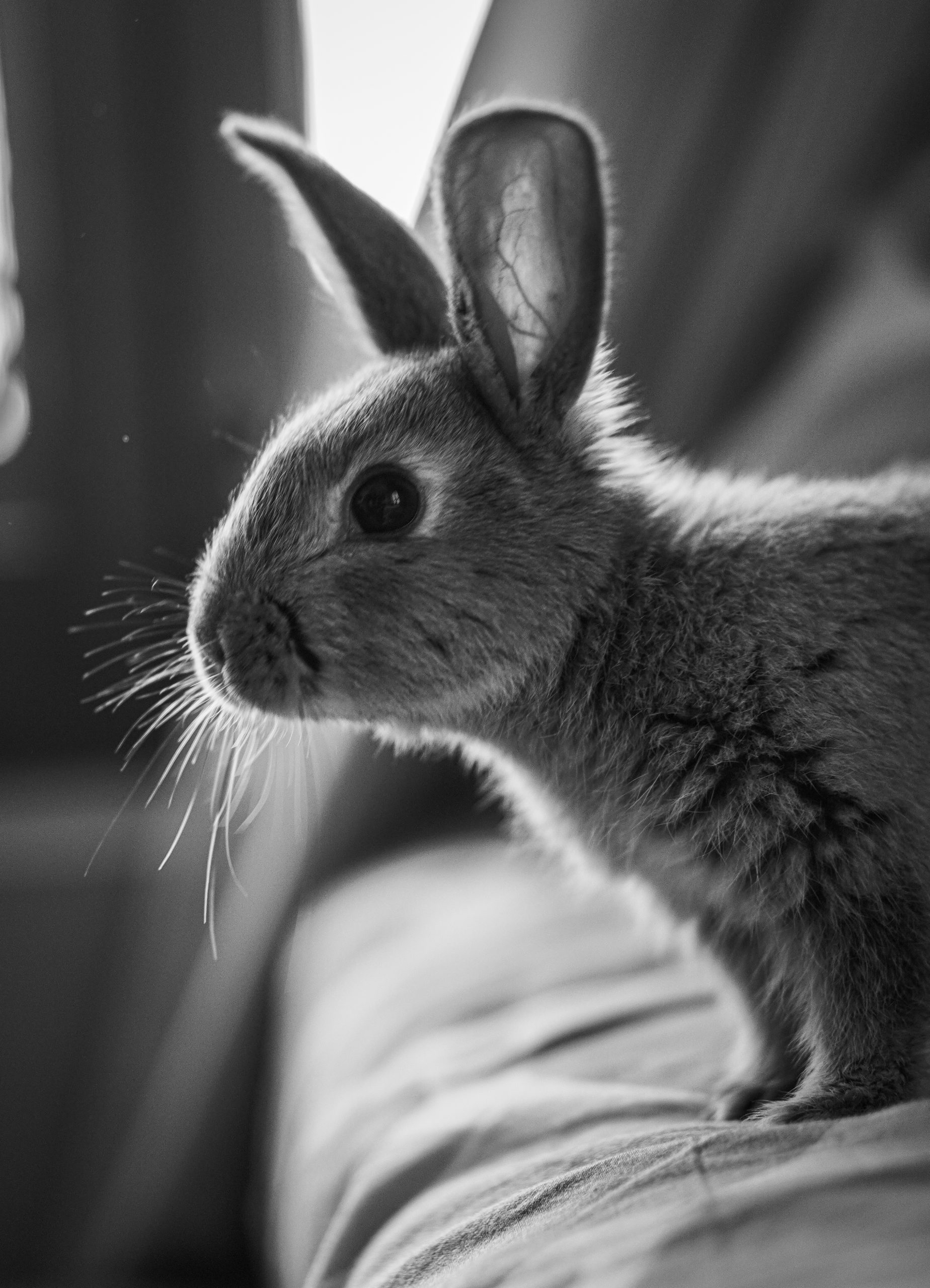 Rabbit on the bed