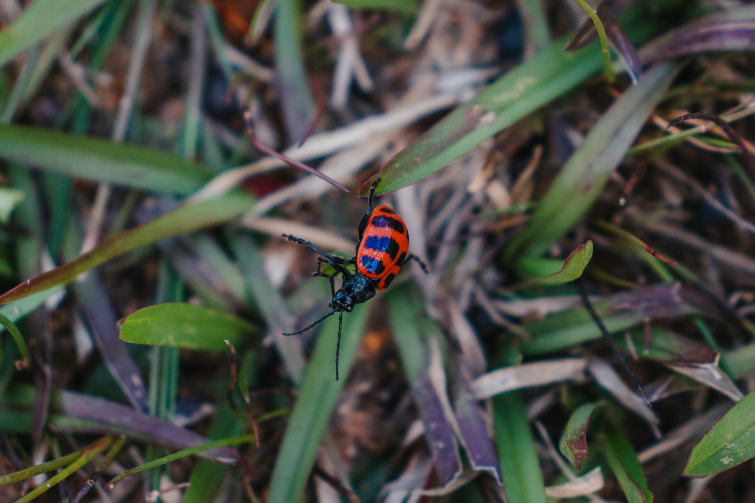 Red bug on plant