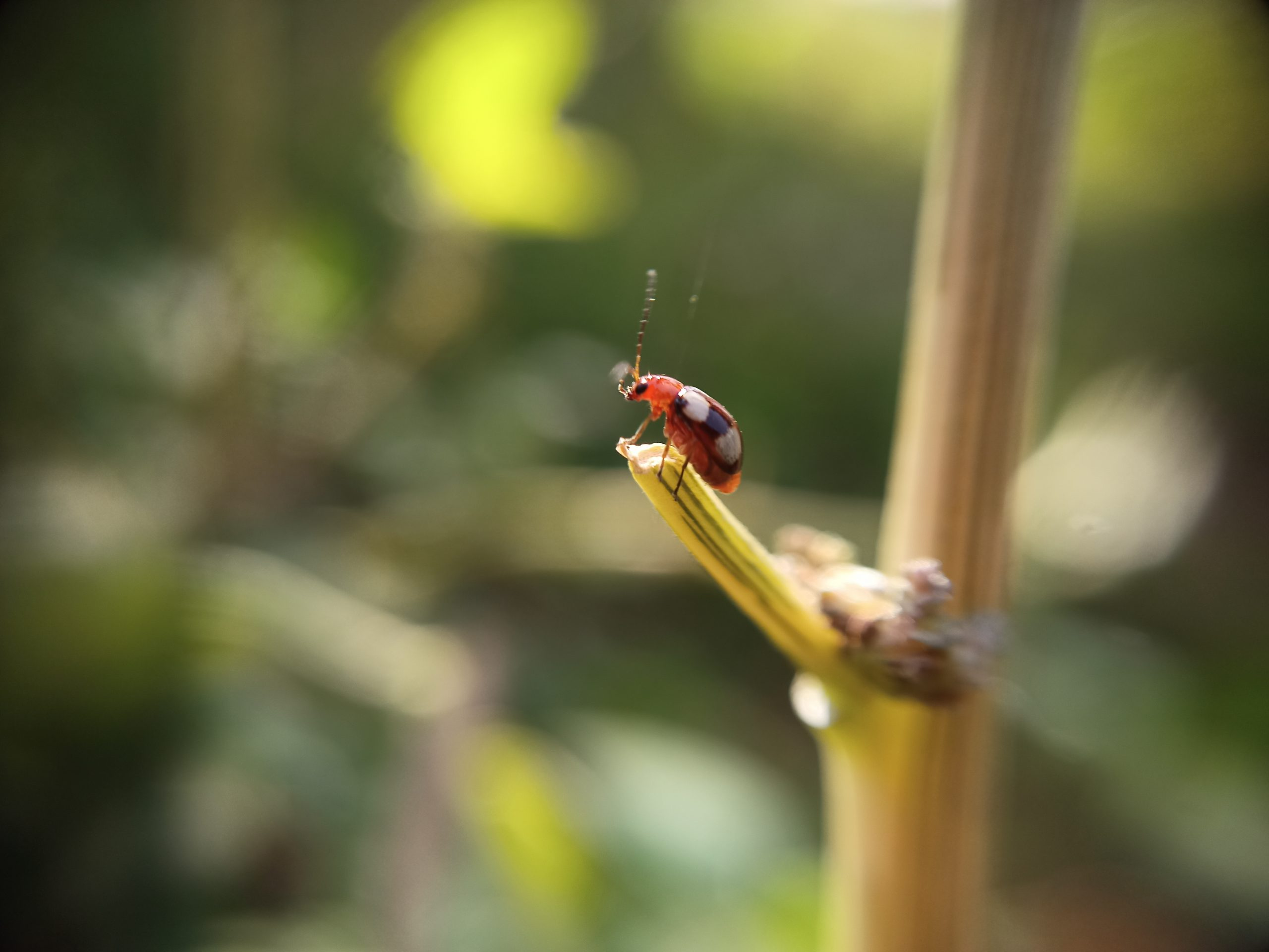 Red bug on plant stem