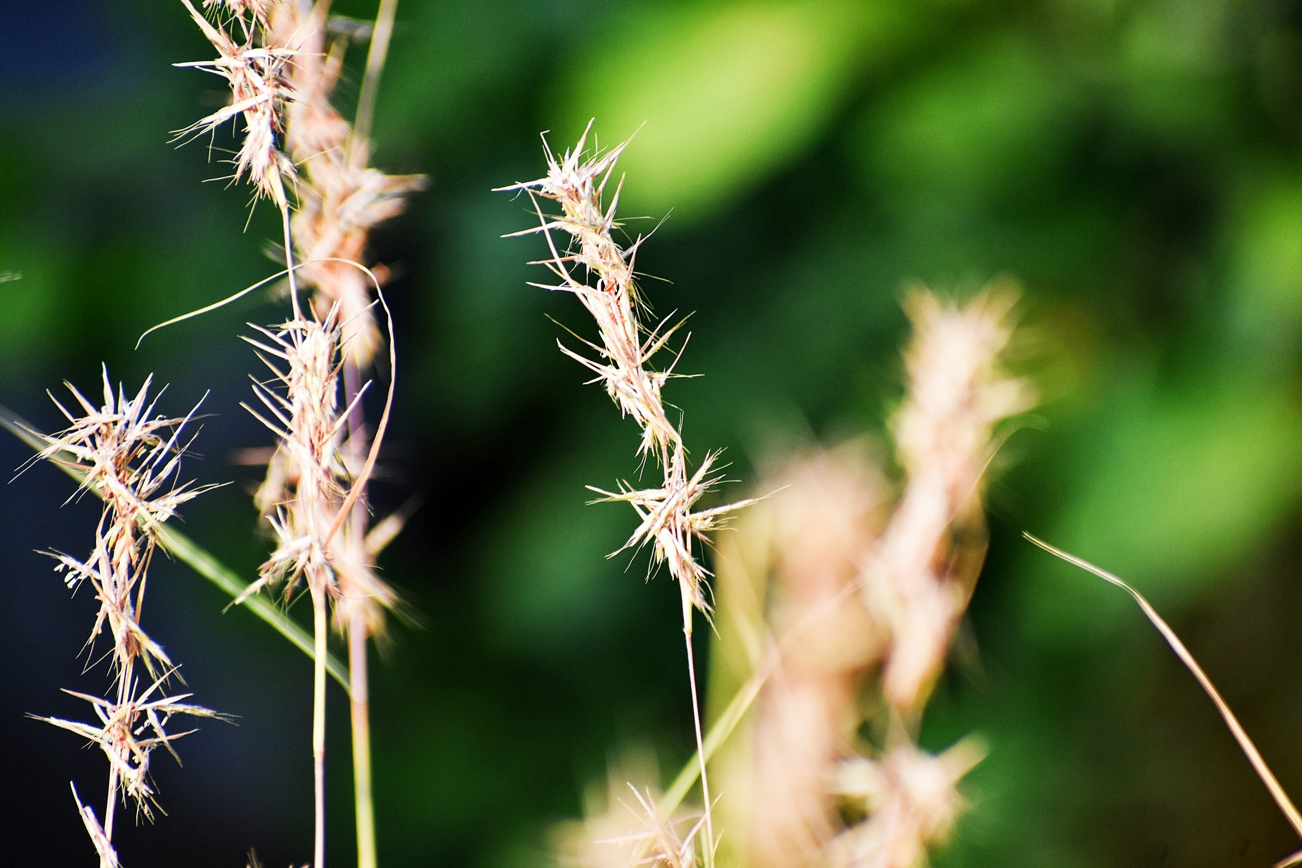 Seeds of grass