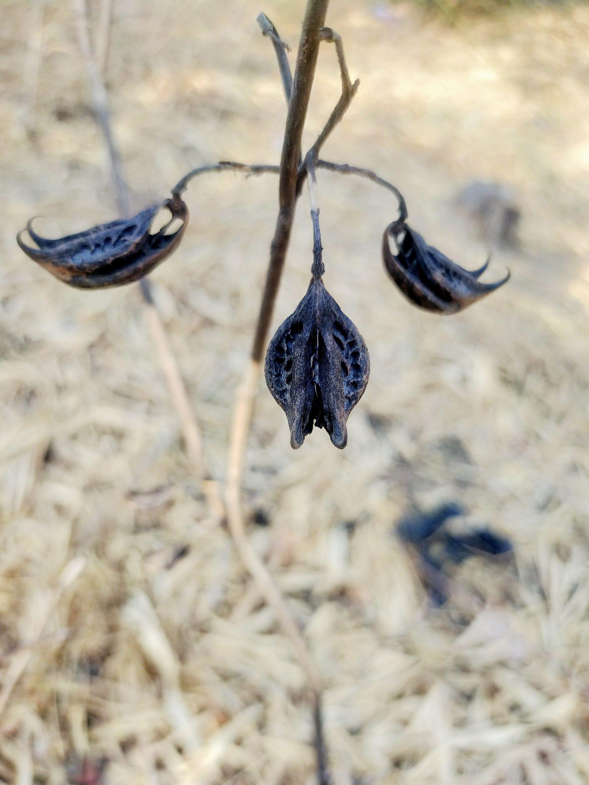 Seeds on plant