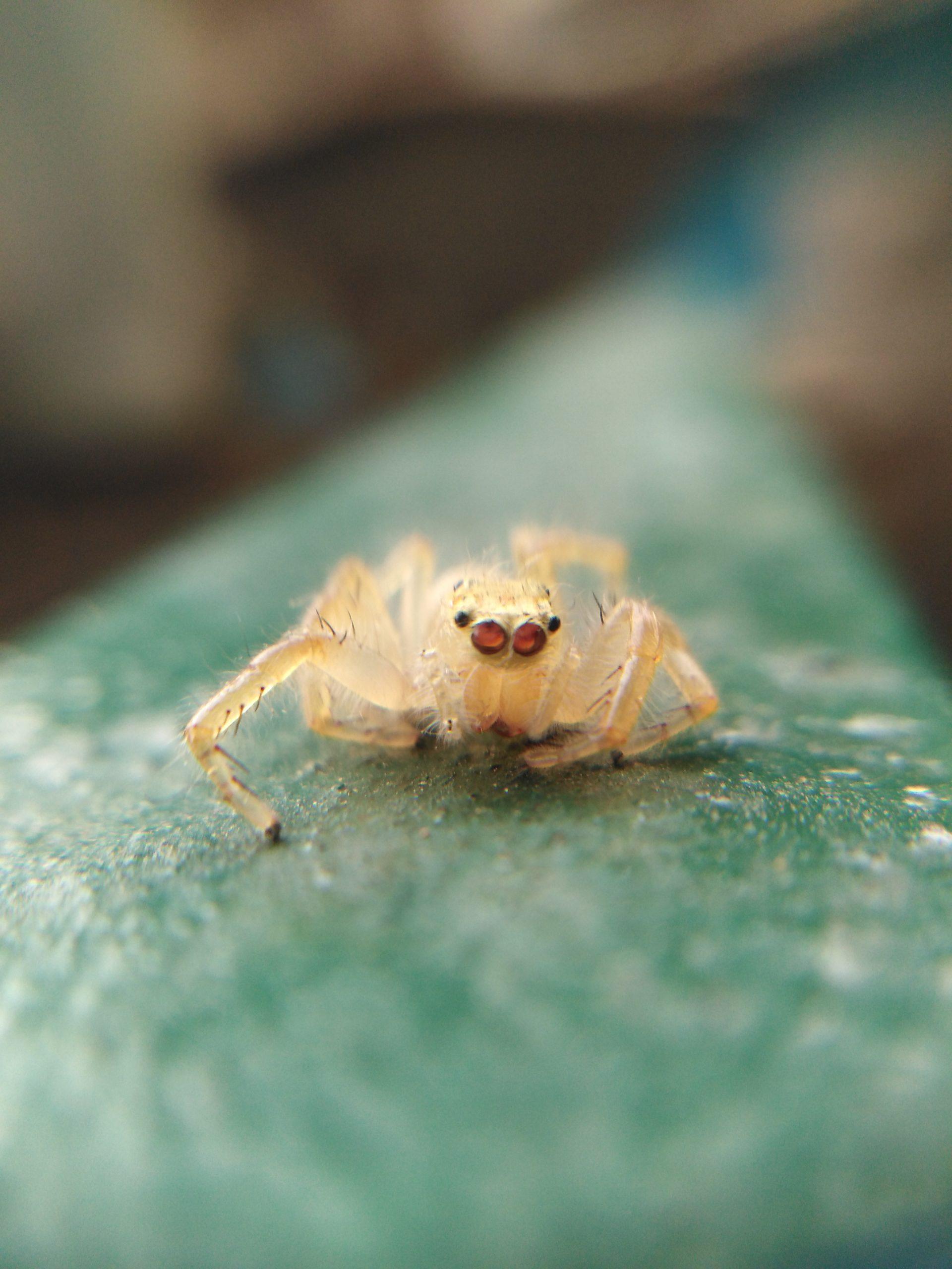 Spider on plant leaf