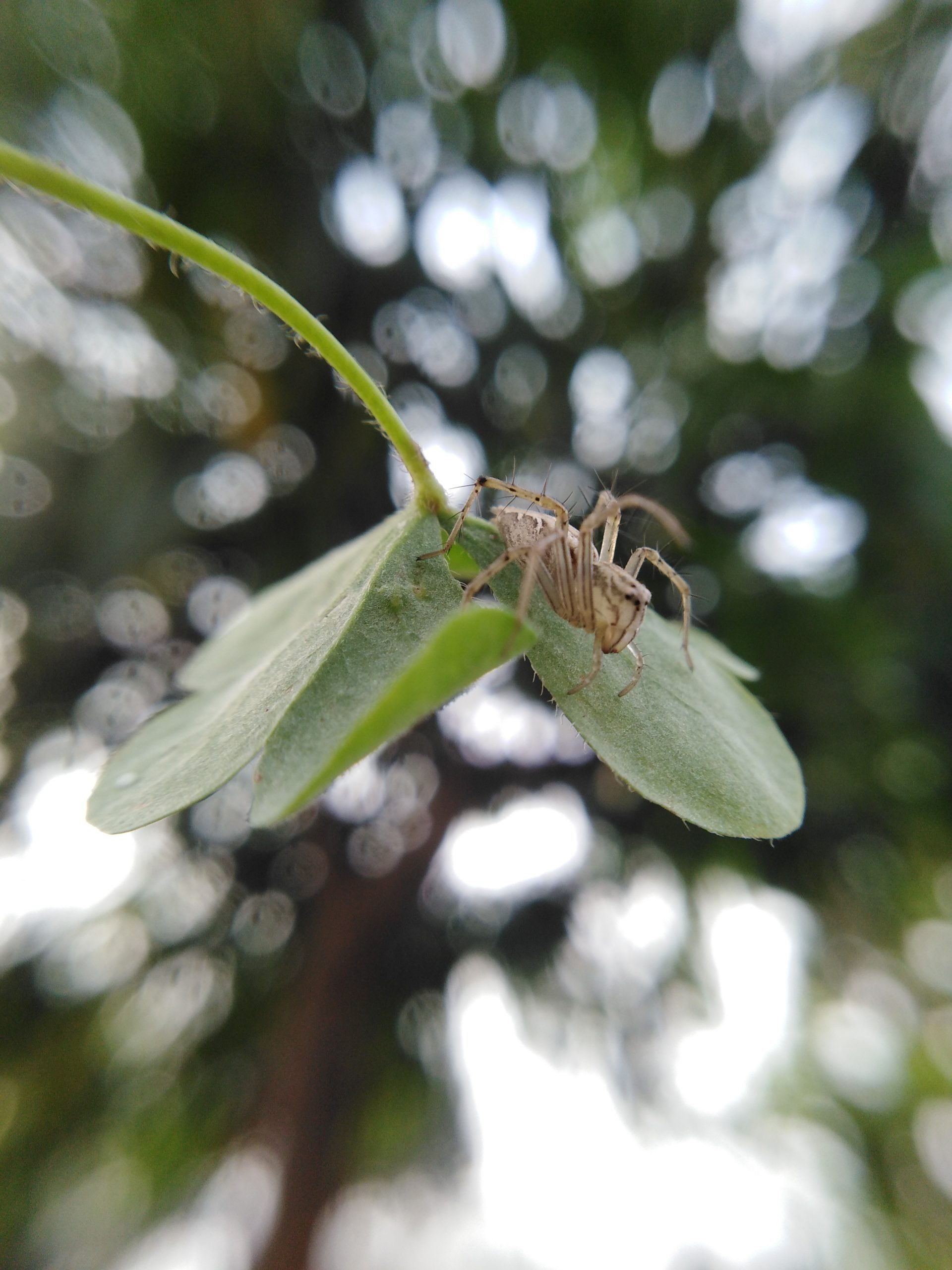 Spider on plant leaf
