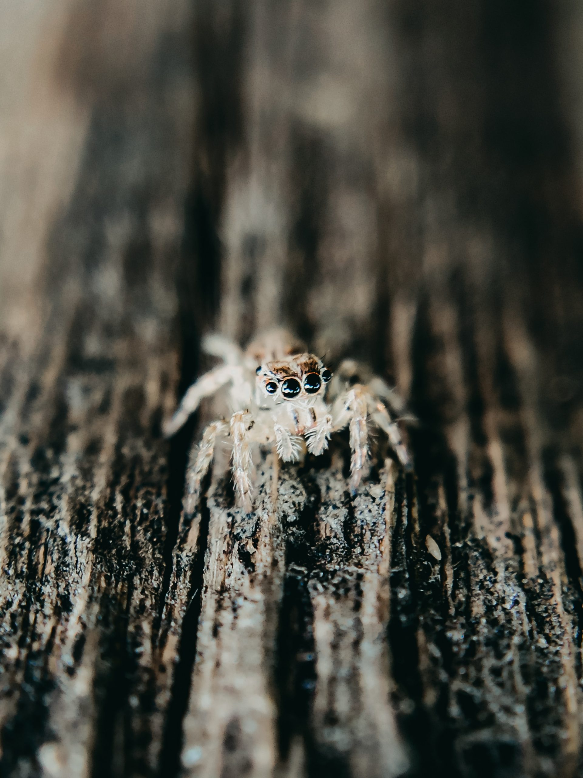Spider on the tree