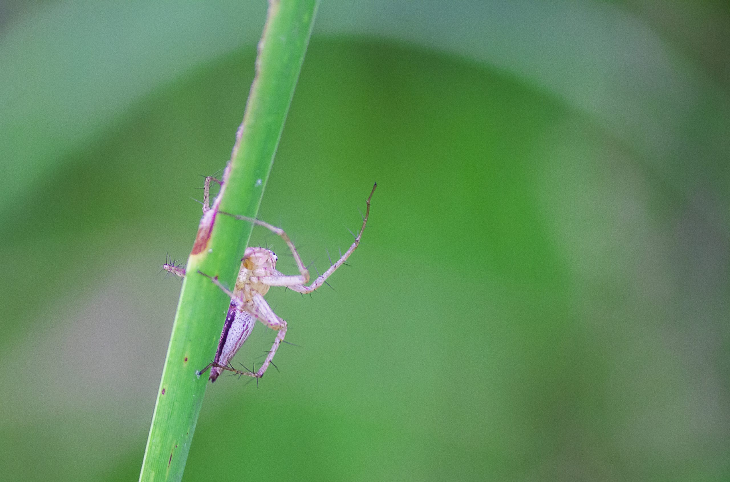 Spider sitting on a Plant Stem