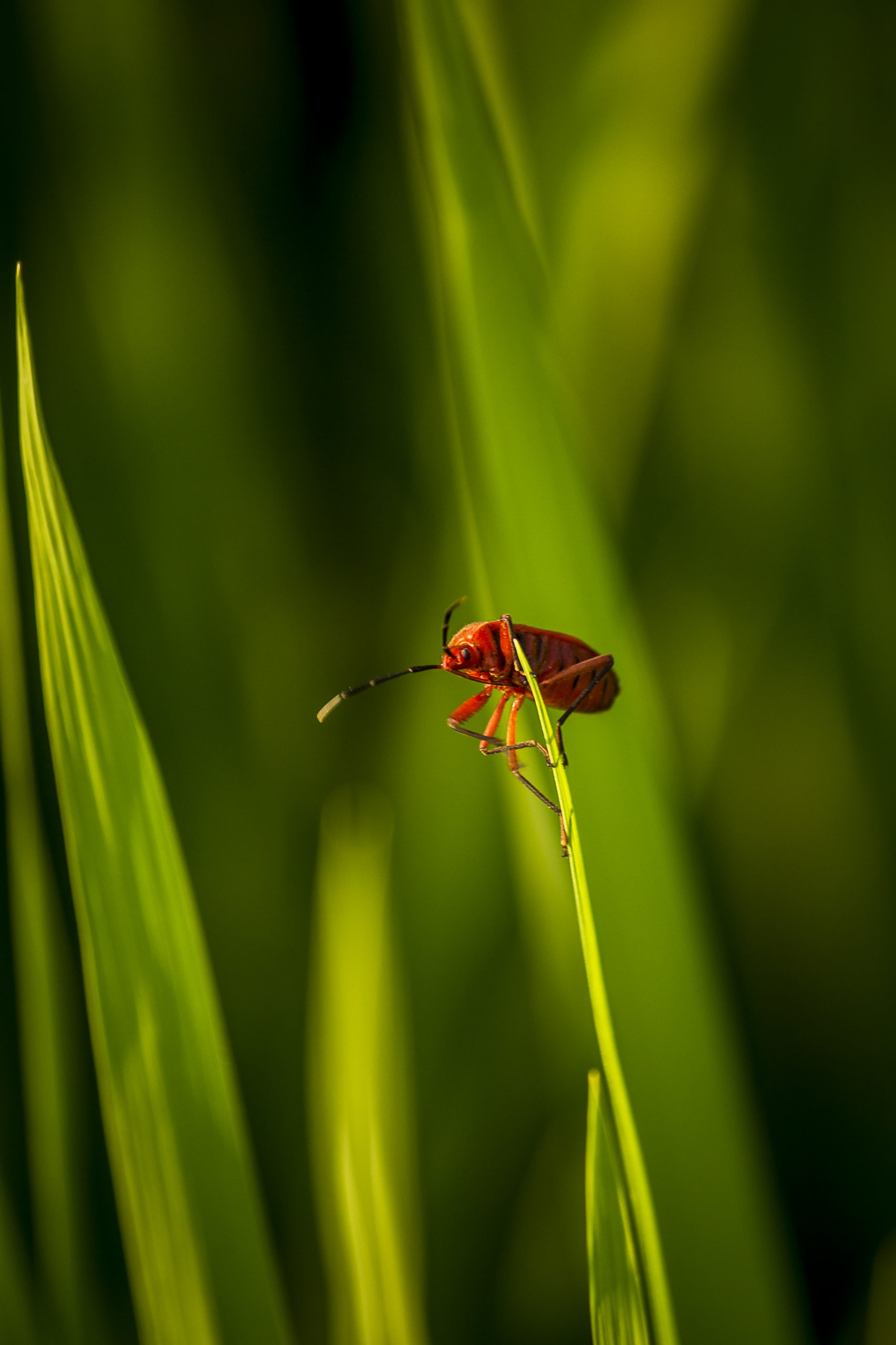 Red bug sitting on a edge of a leaf