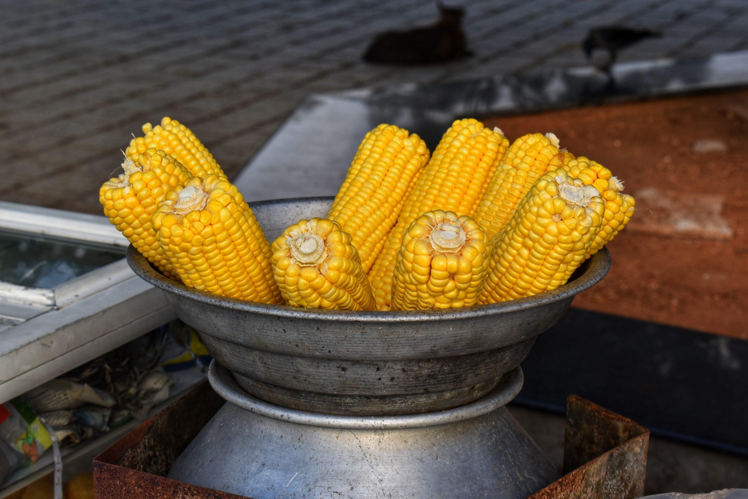 Corn cobs in a pot