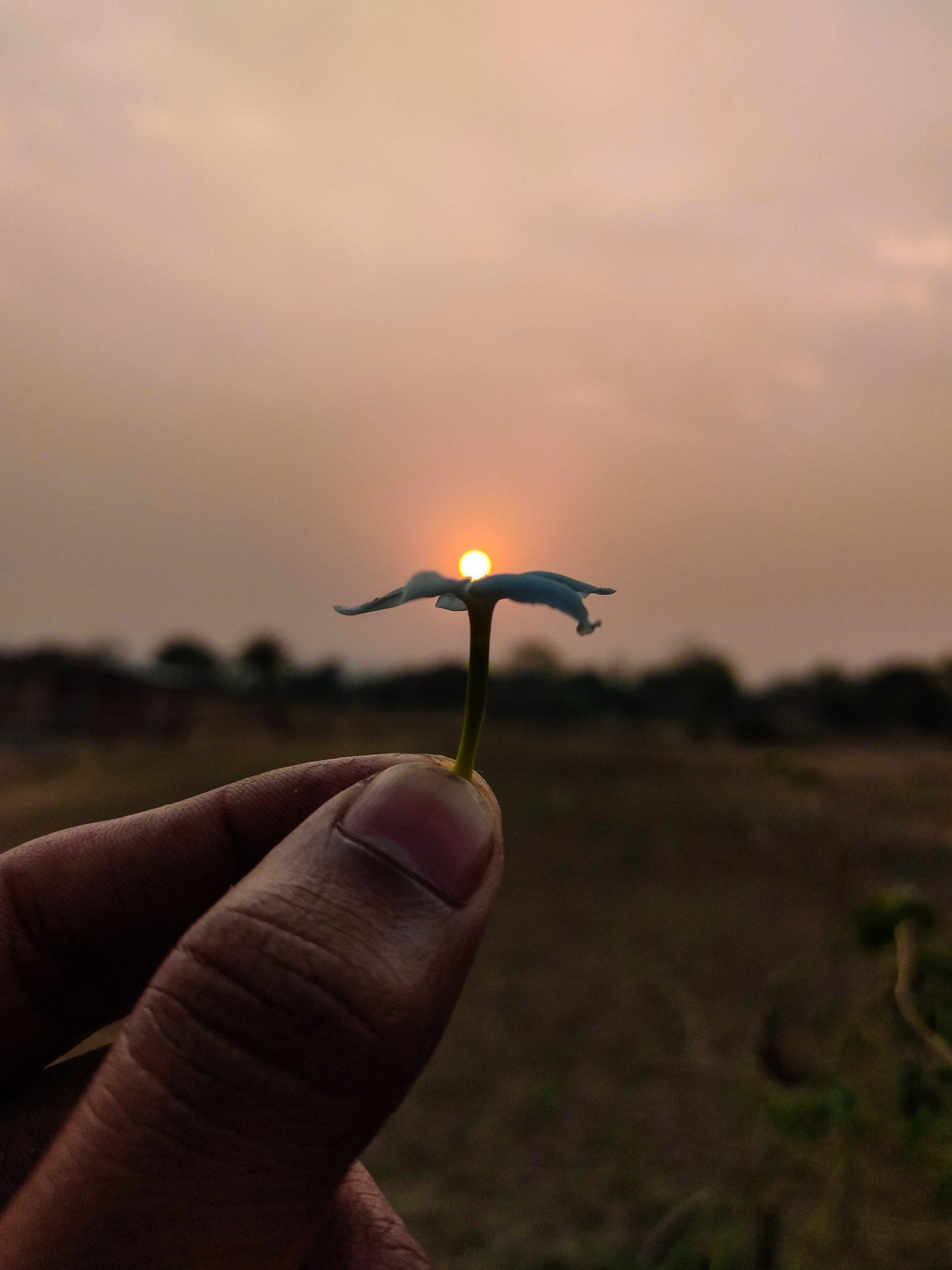 Sun on a flower