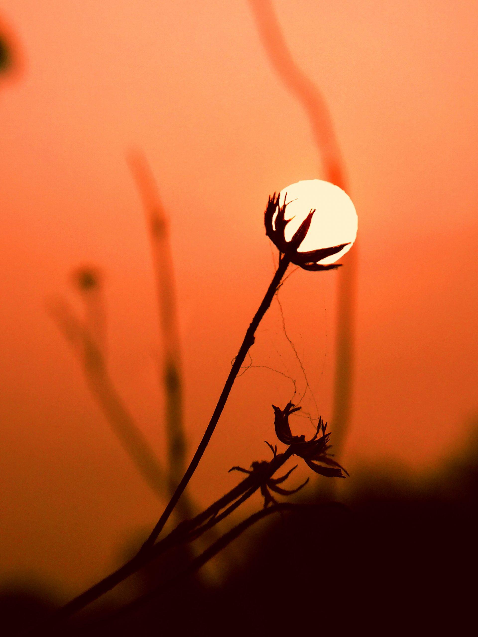 Sun on plant