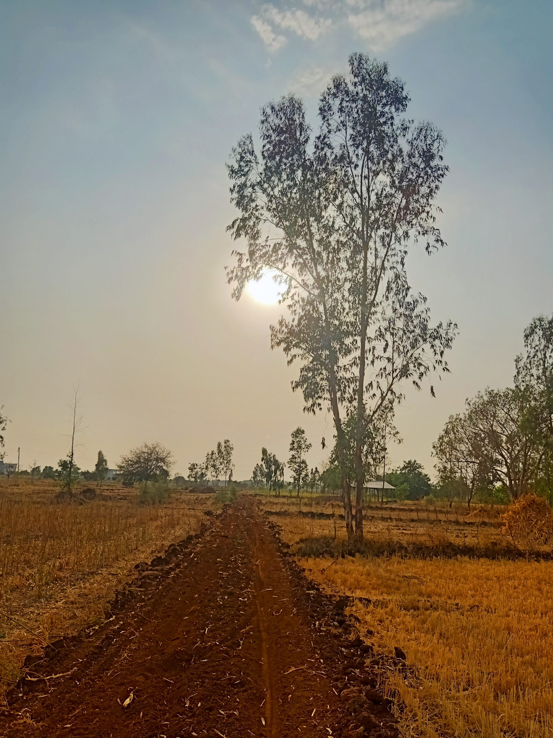 Agriculture land and a tree