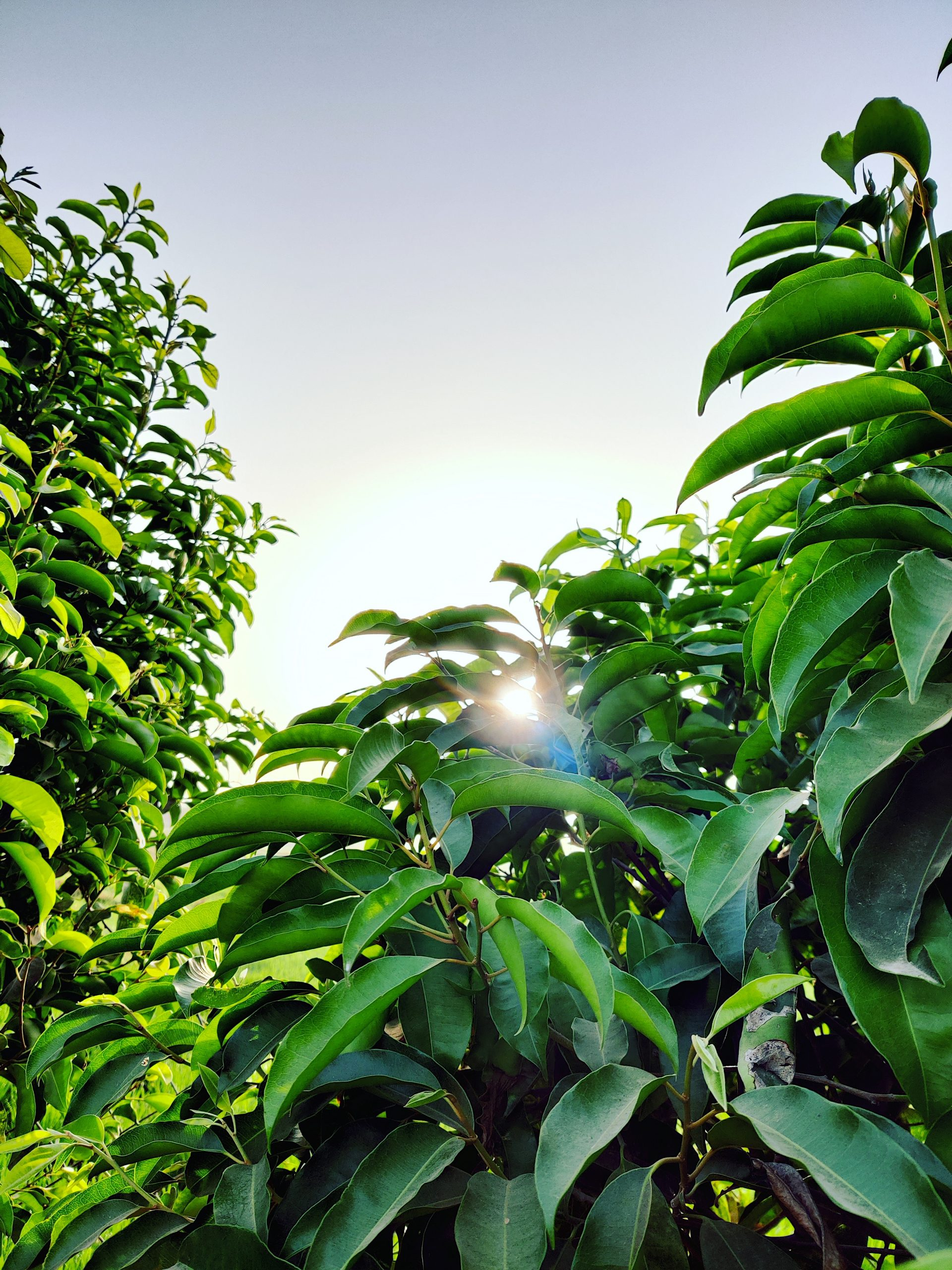 Sunrise between the leaves