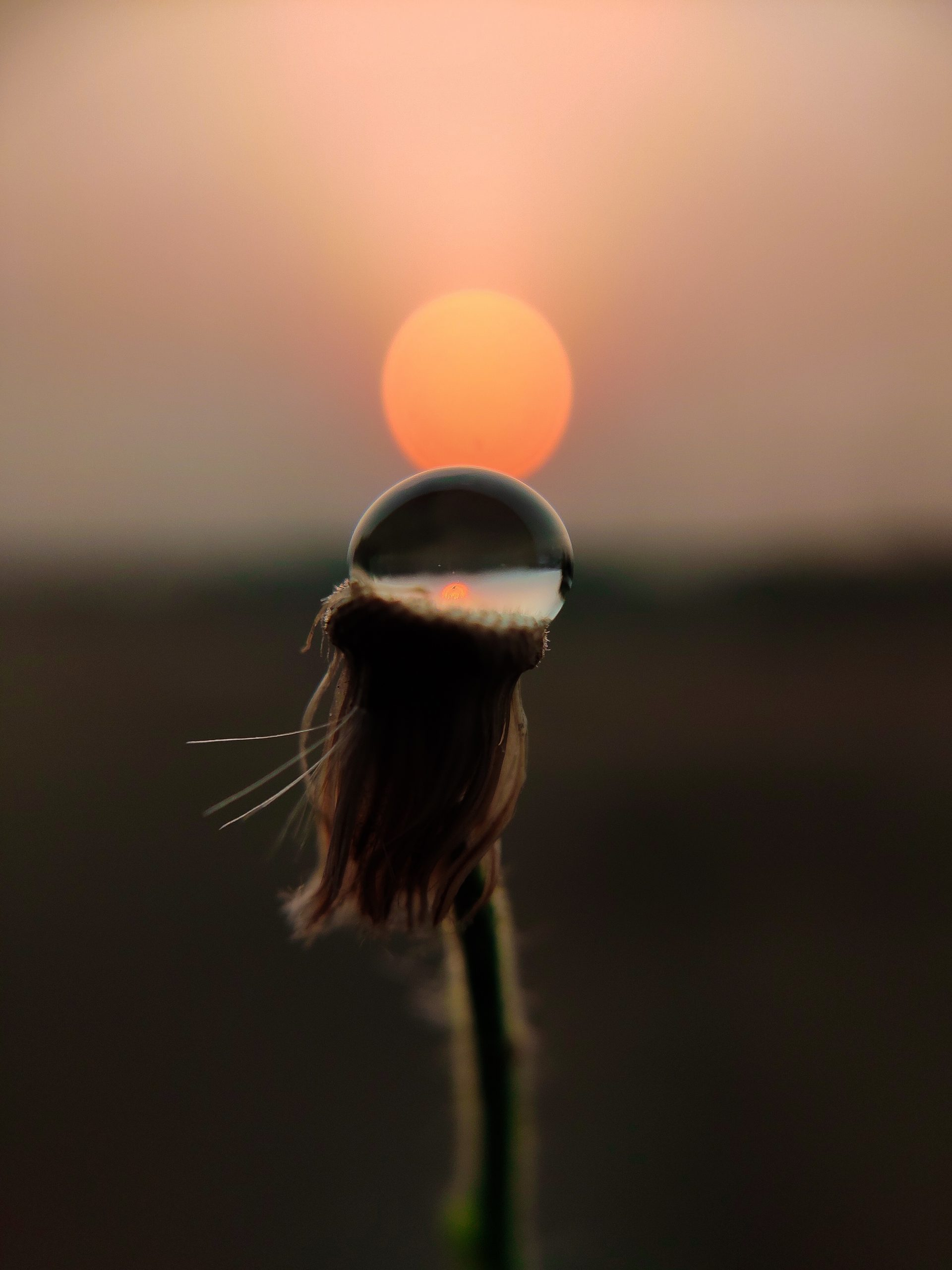 Waterdrop on the plant stem during Sunset