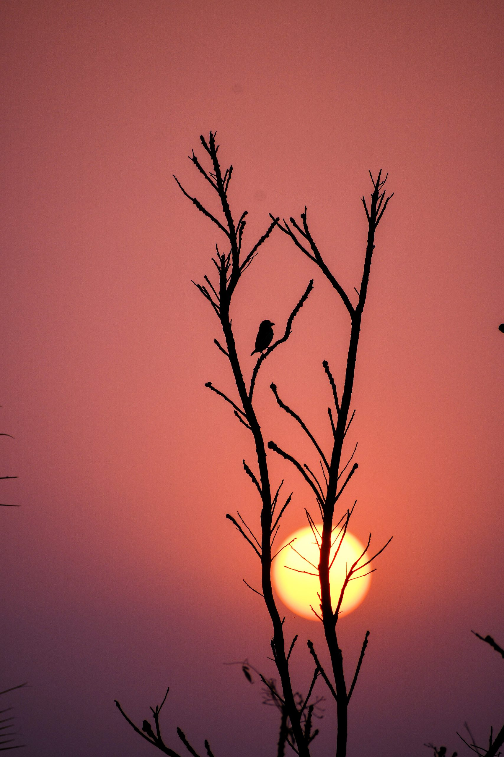 Sunset through a plant