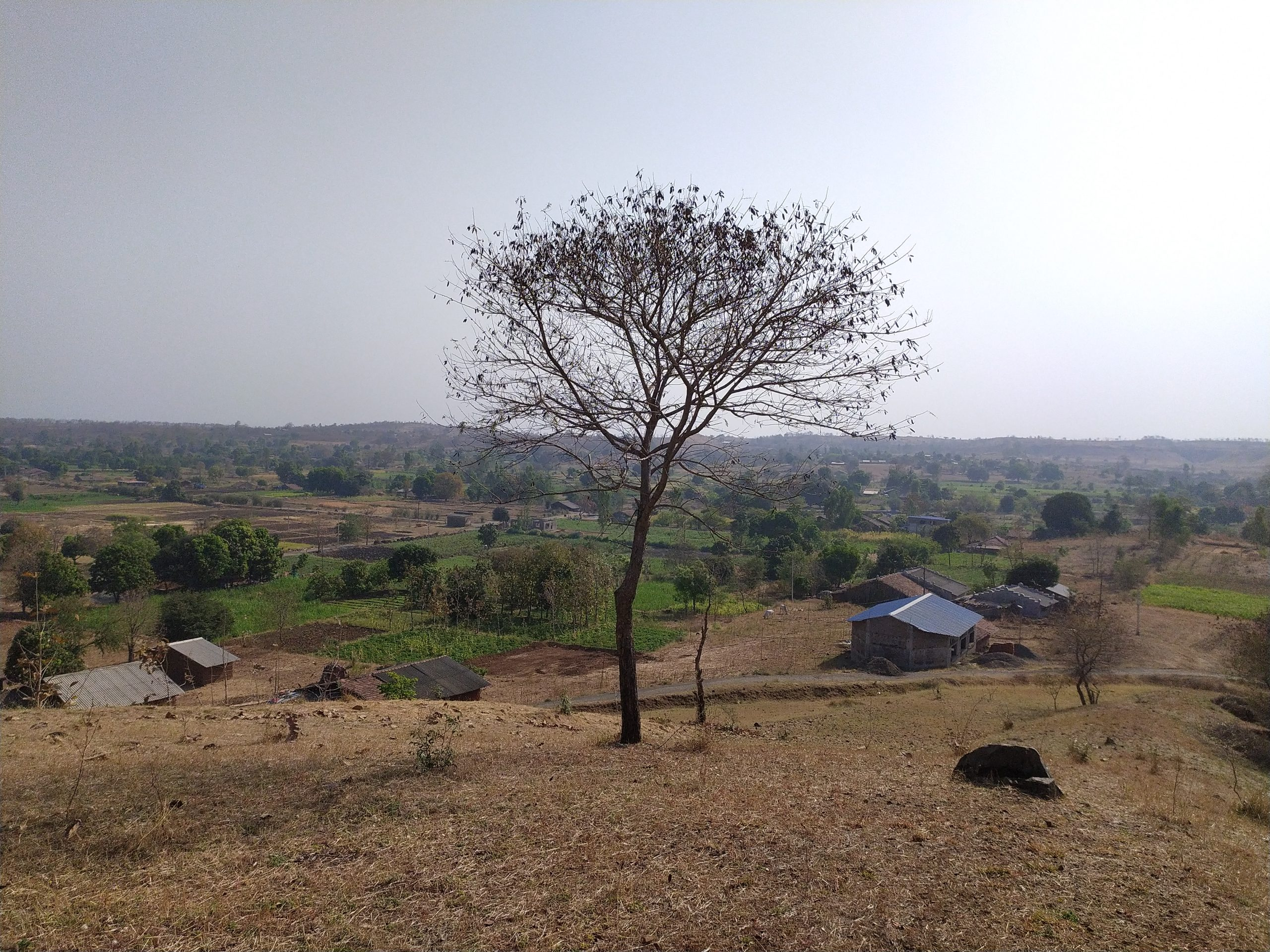 Tree, hill and houses