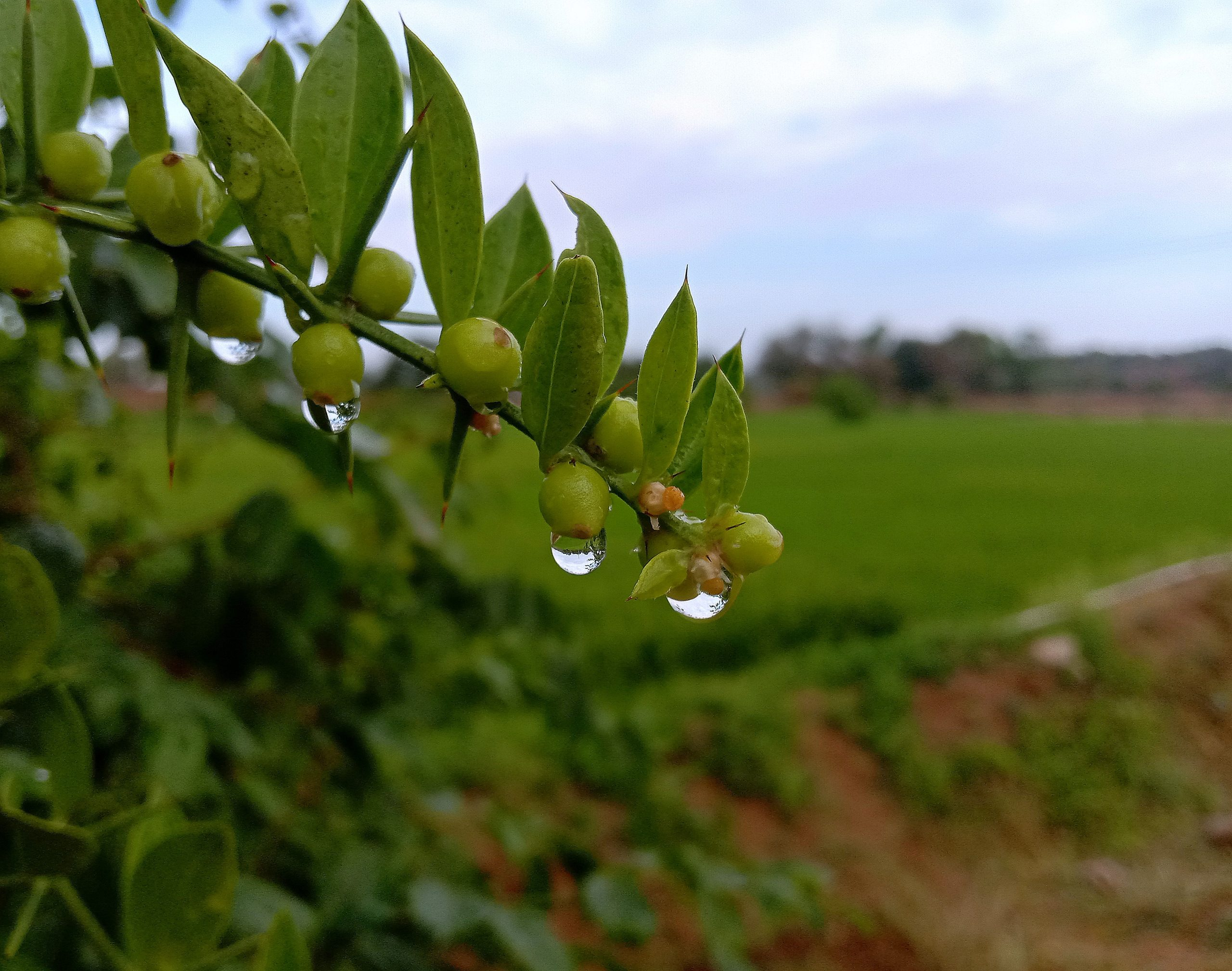 Waterdrops on plant