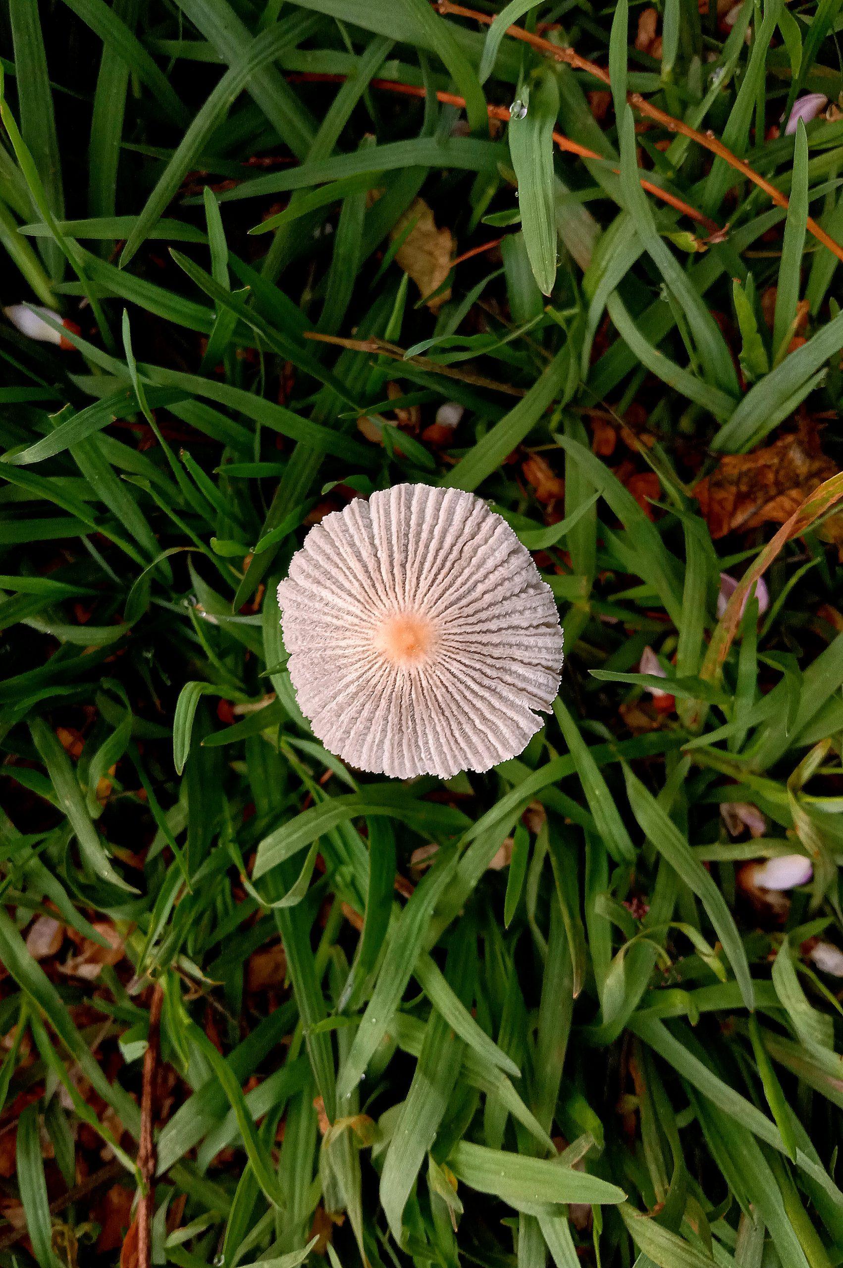 Wild flower in the grass