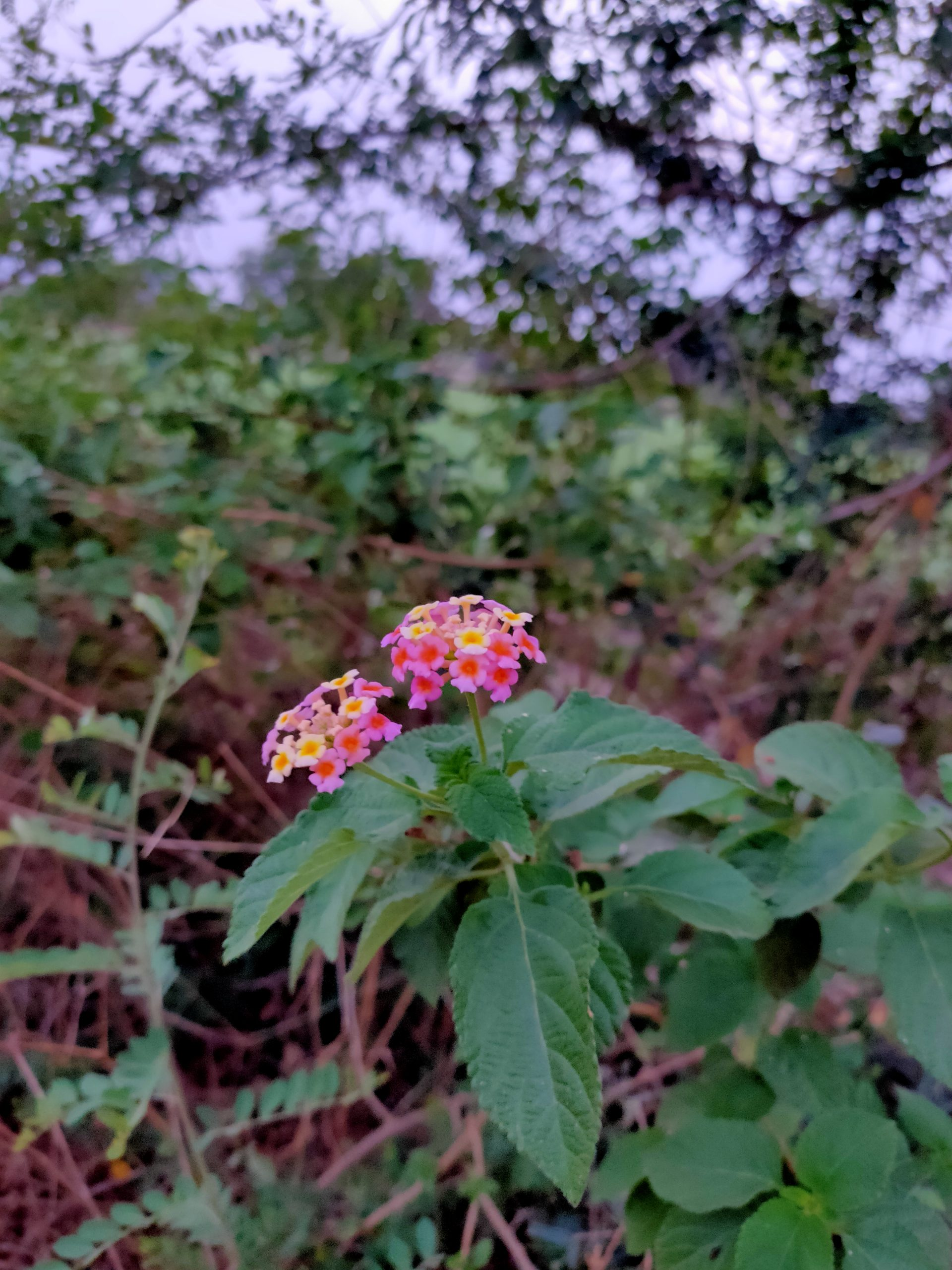 Wild flower on the plant