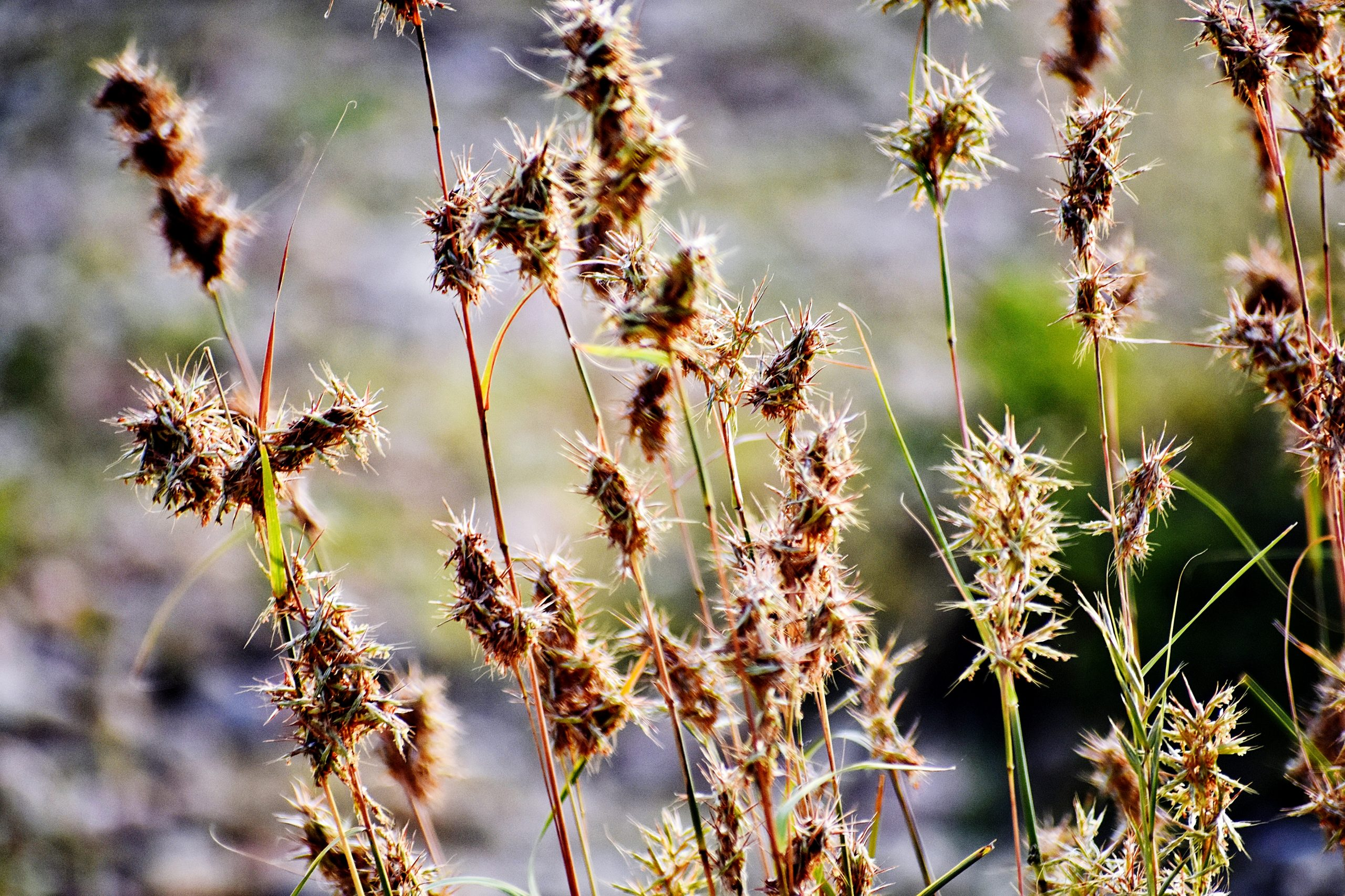 Wild plants in forest