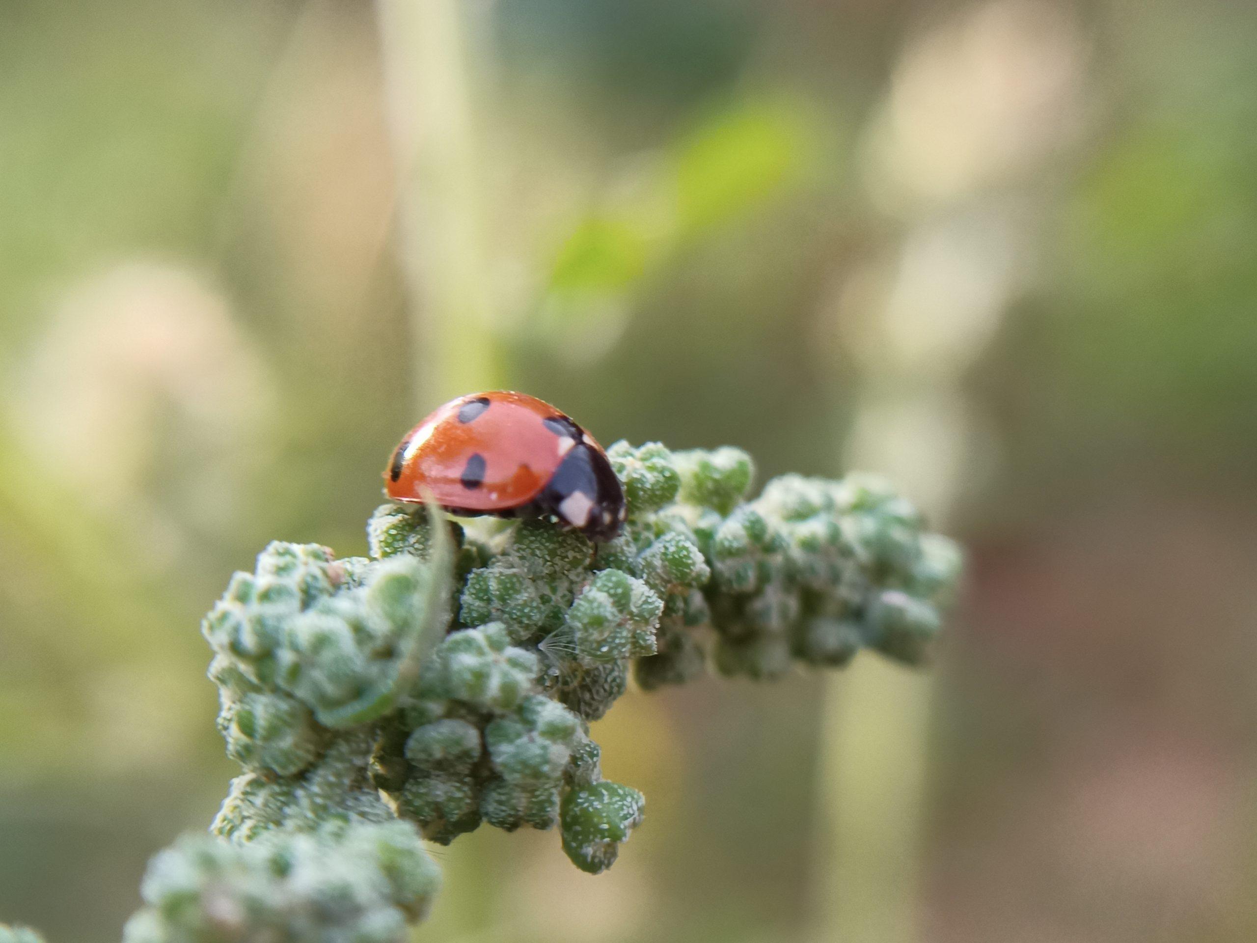 A ladybug on a plant