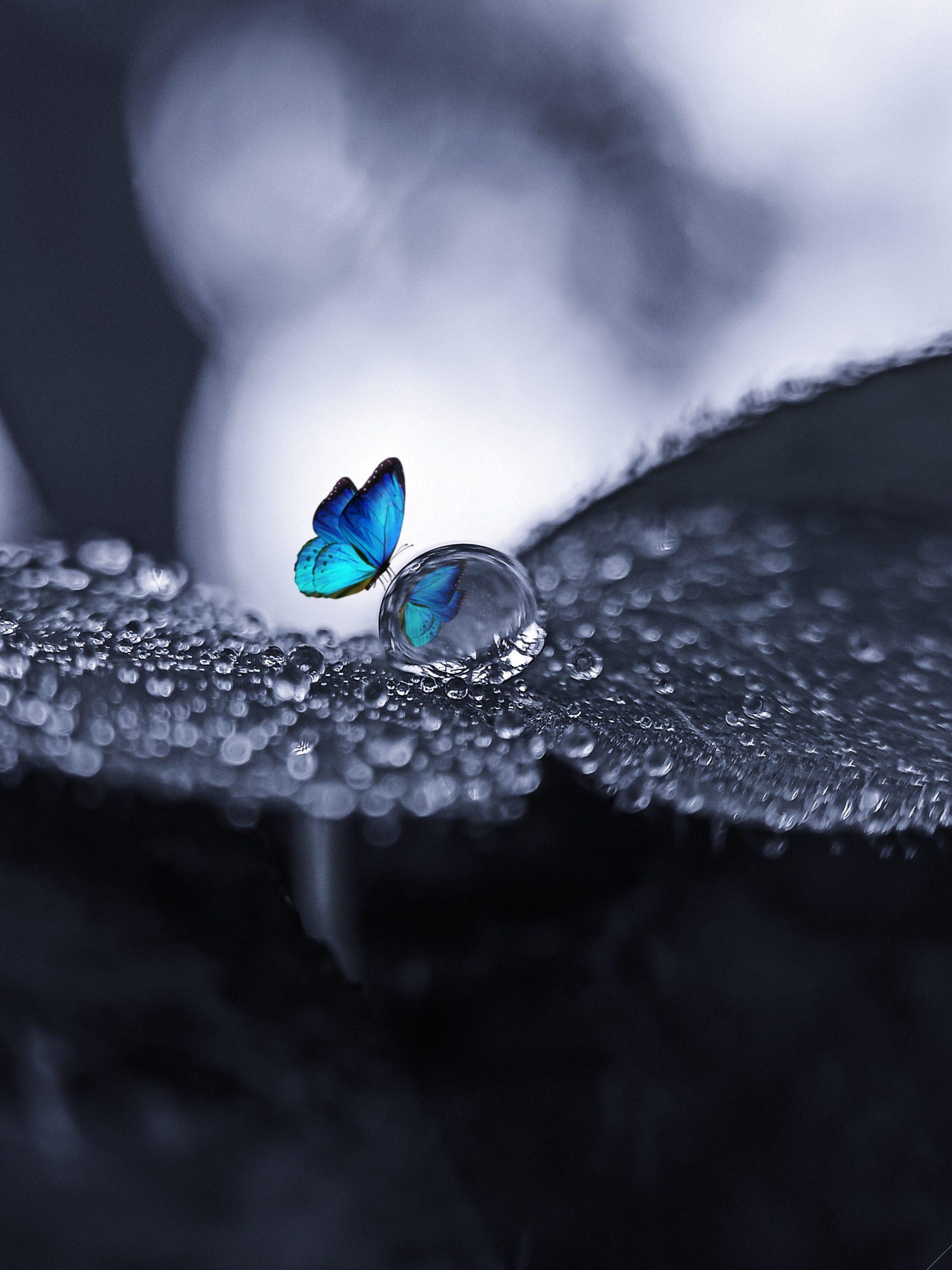 Butterfly on drop