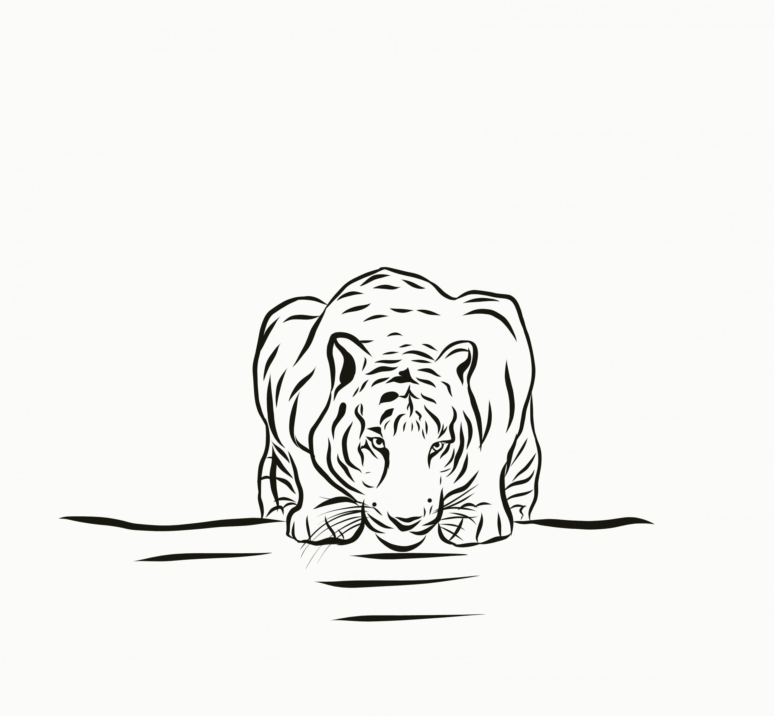 illustration of tiger drinking water