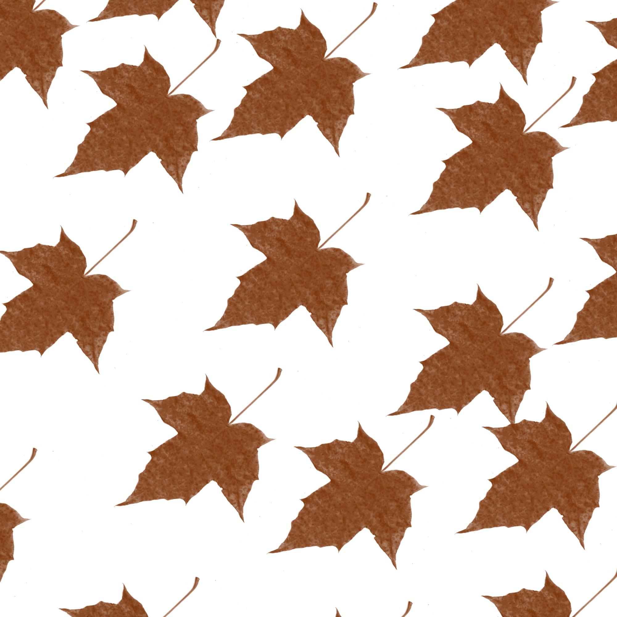 A plant leaves illustration