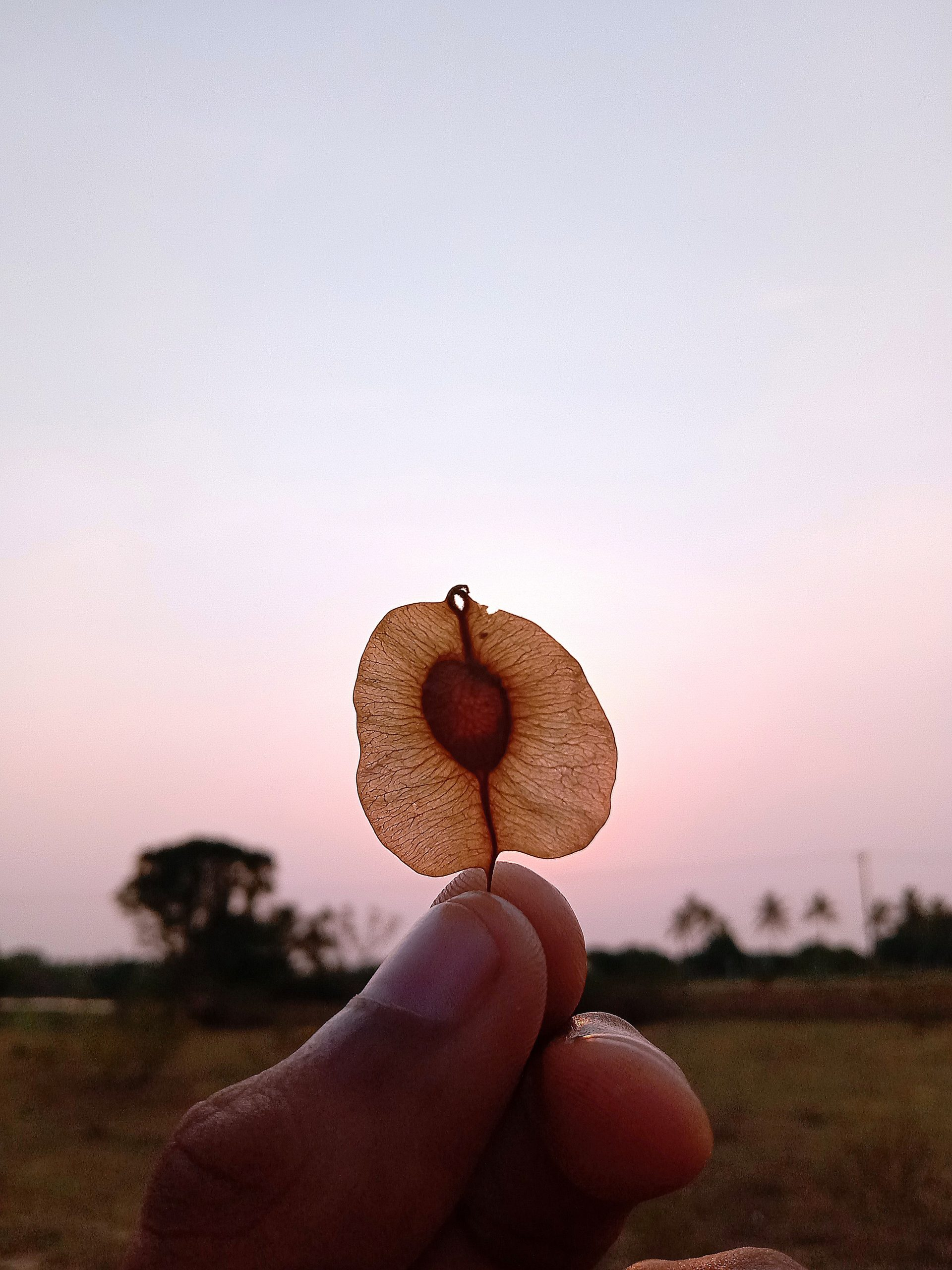 tiny leaf in hand
