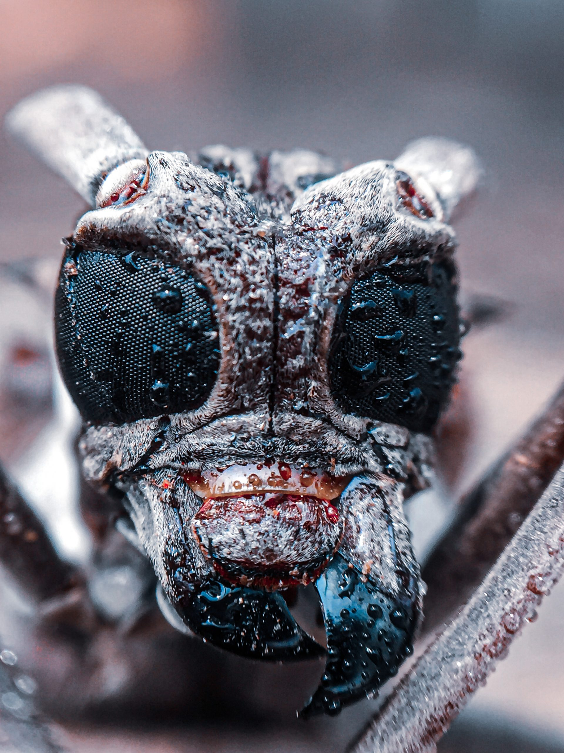 Face of an insect