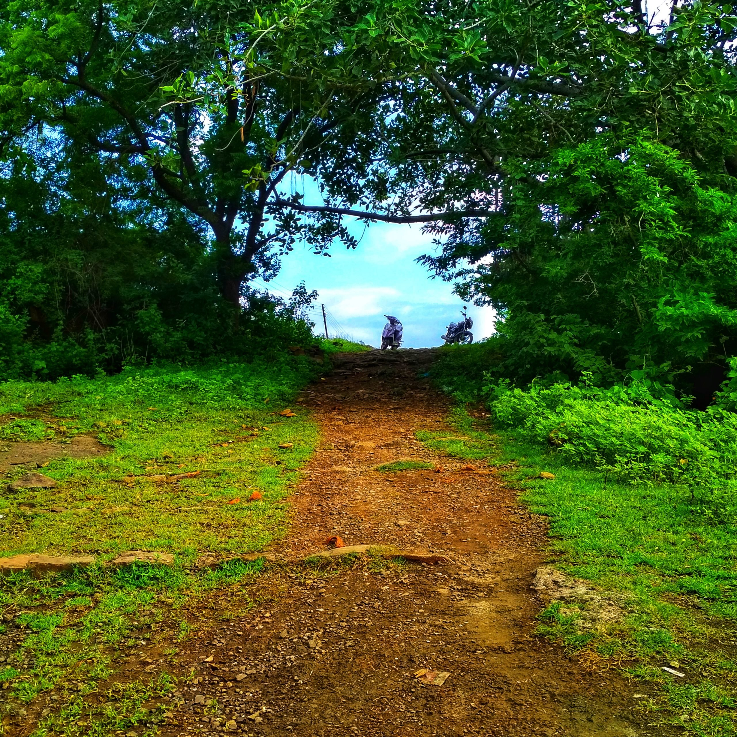 A green path and trees