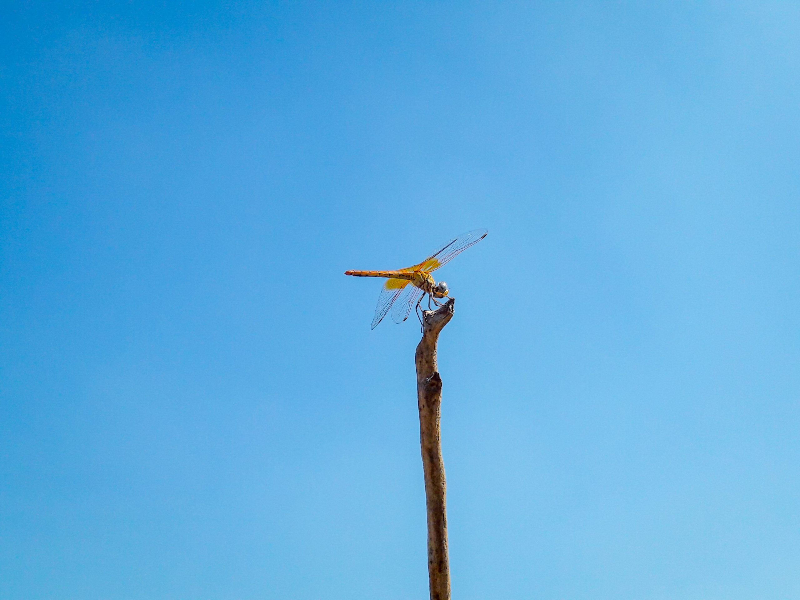 A dragonfly on a twig