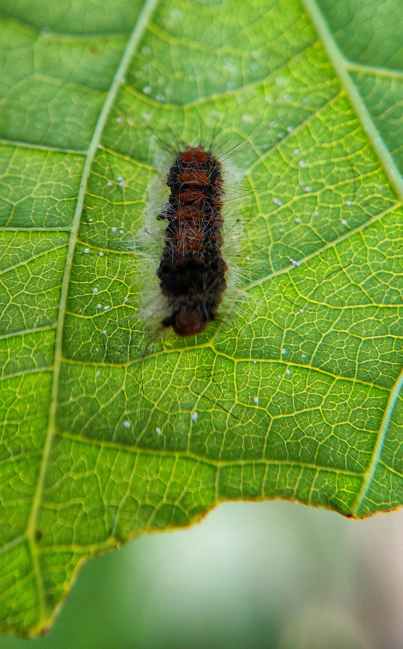 A thorny worm on a leaf