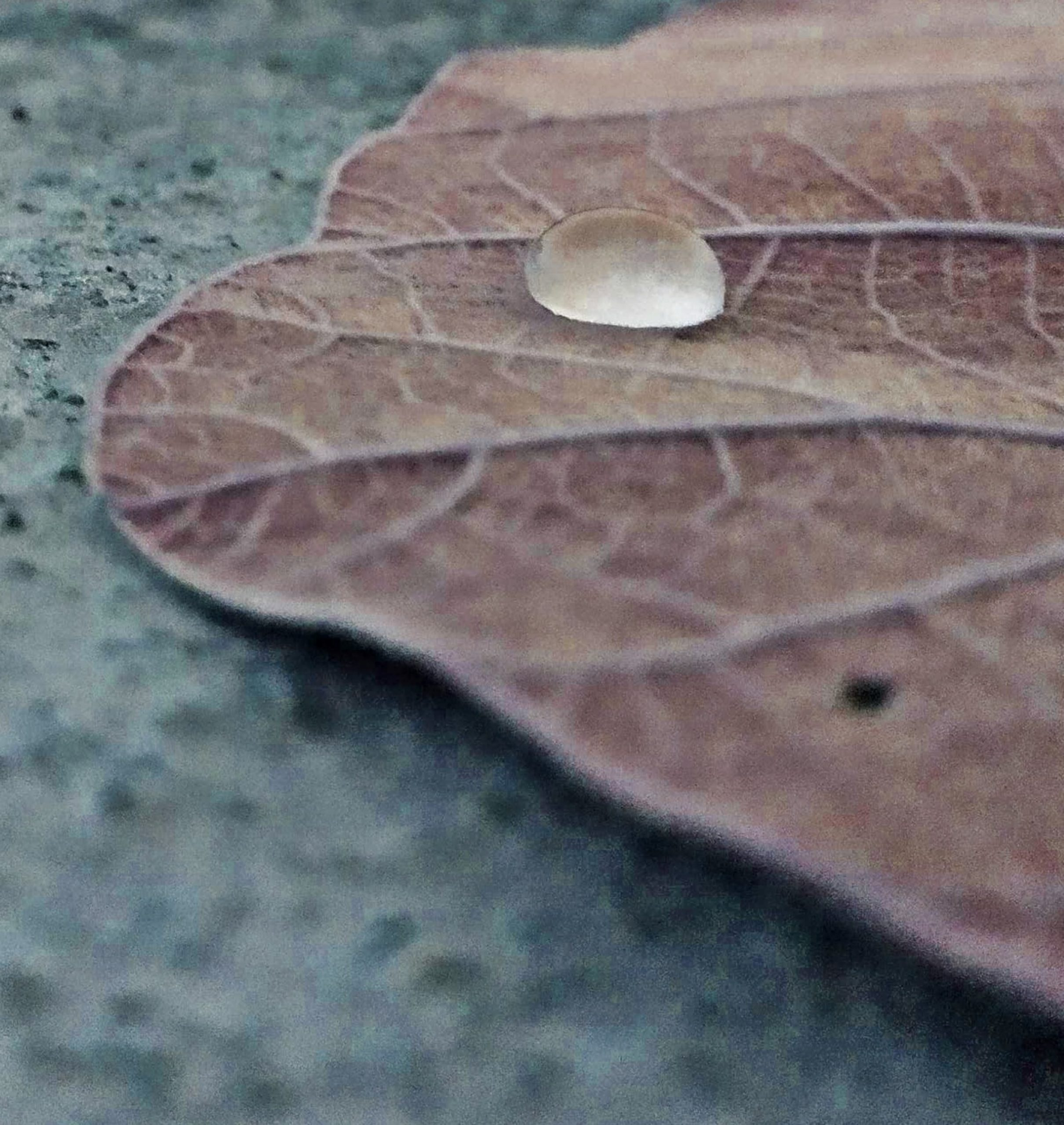 A water drop on a leaf