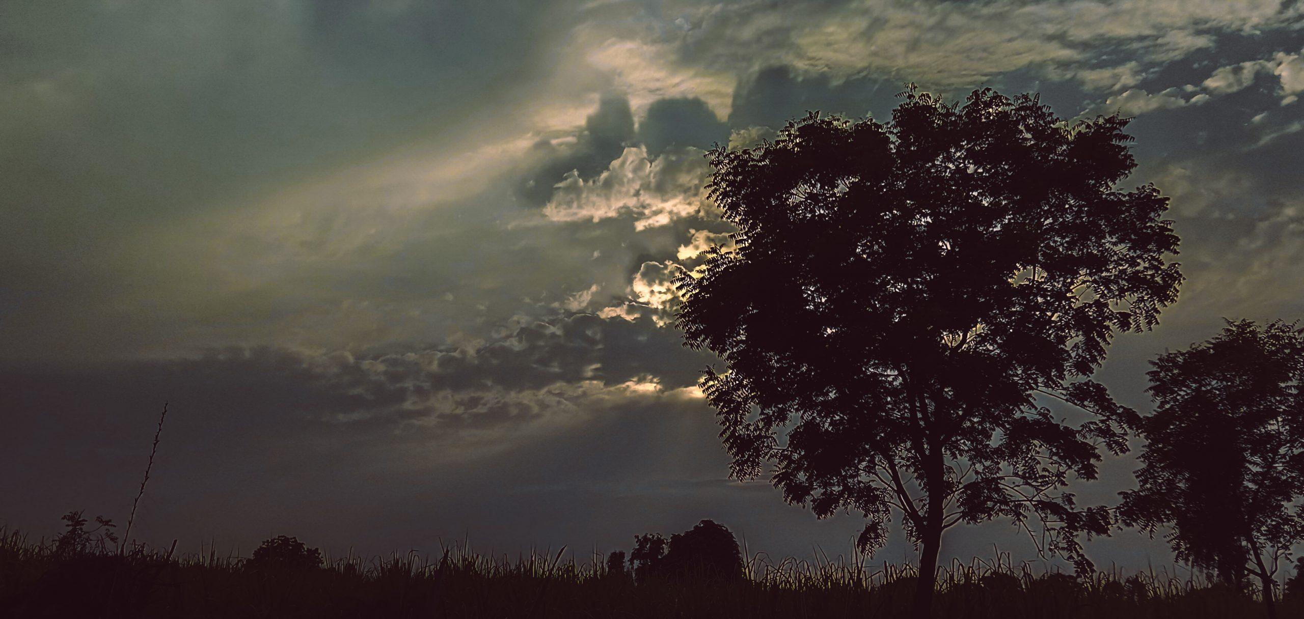 Clouds and a jungle