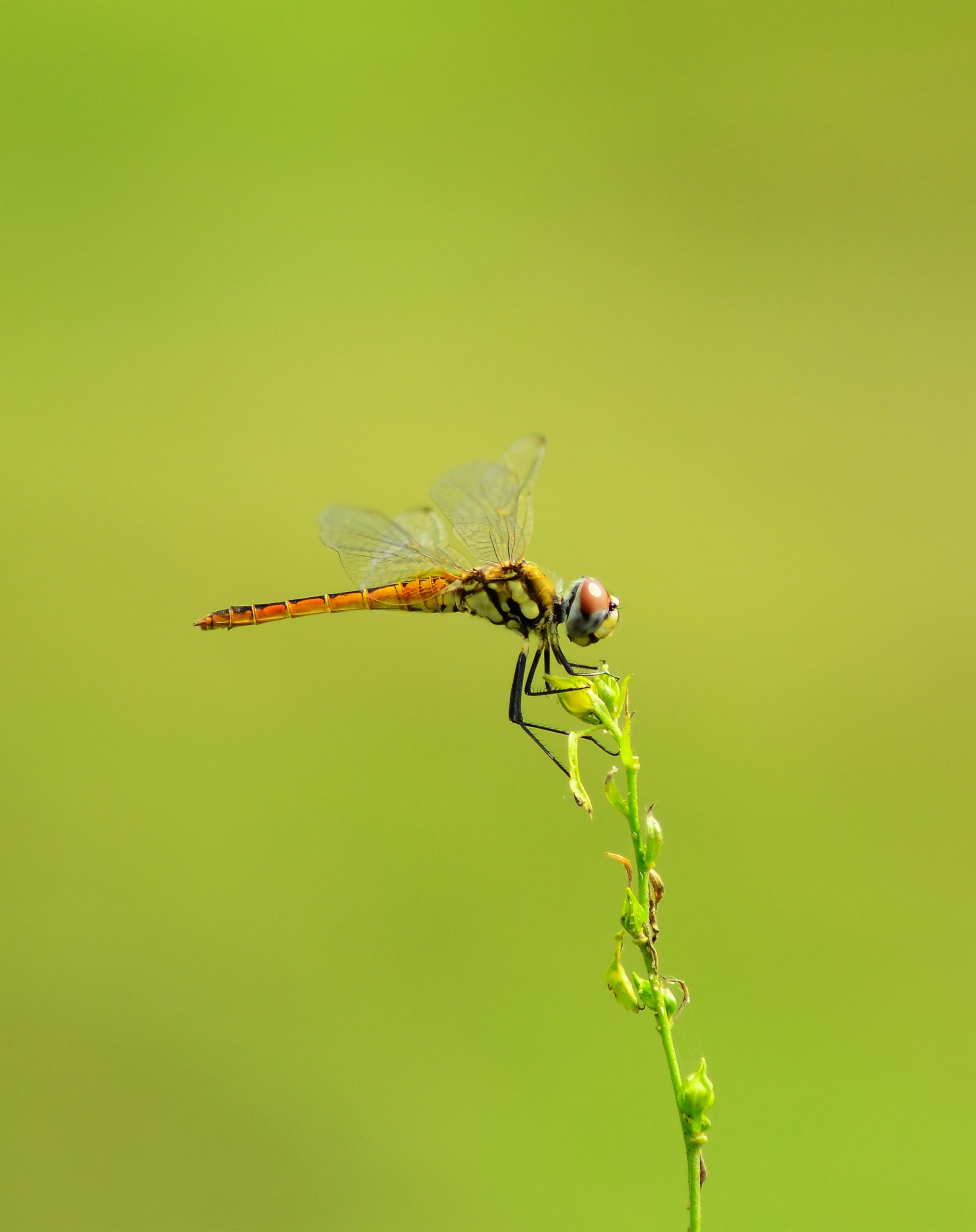 Dragon fly on plant