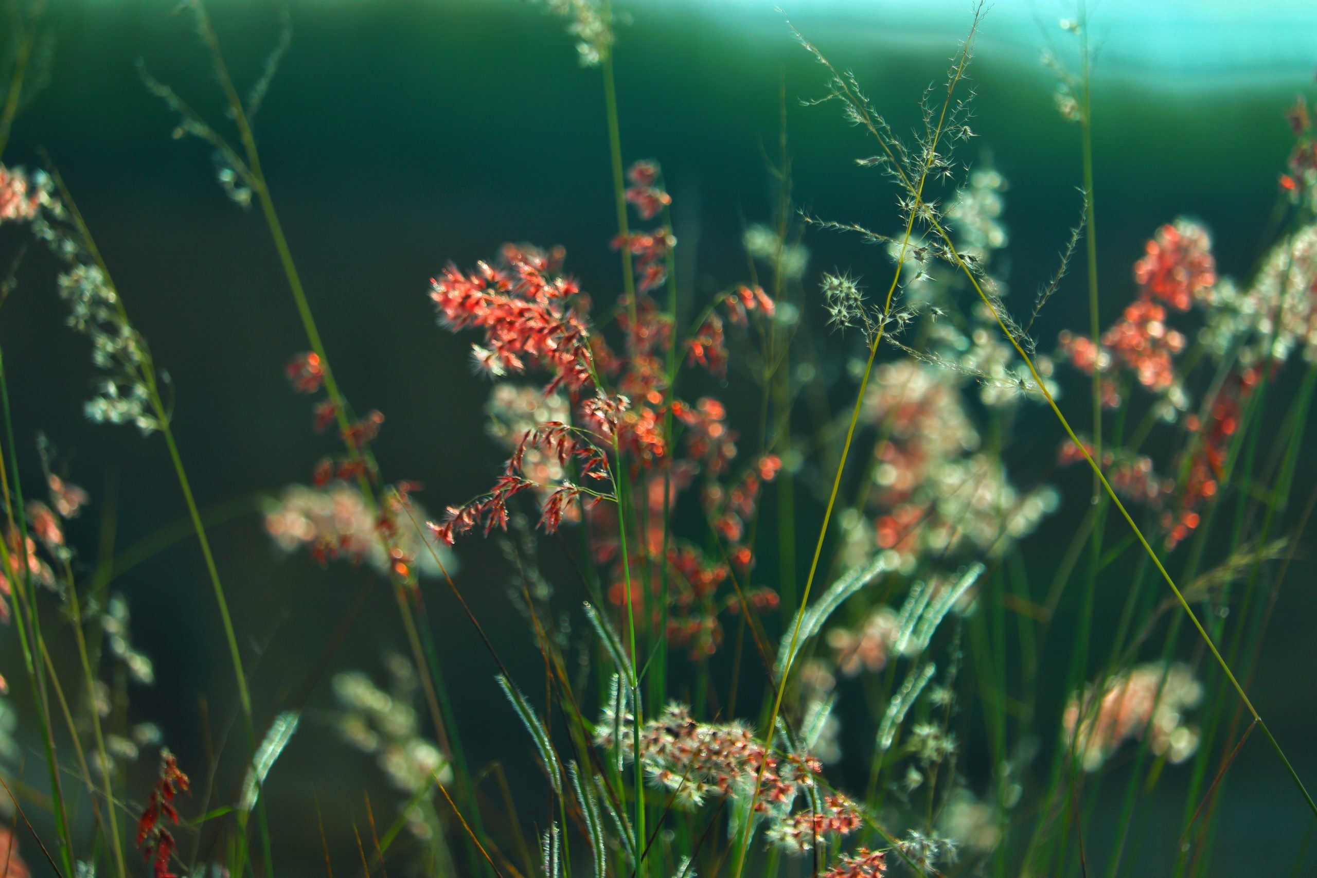Grass and grassy flowers