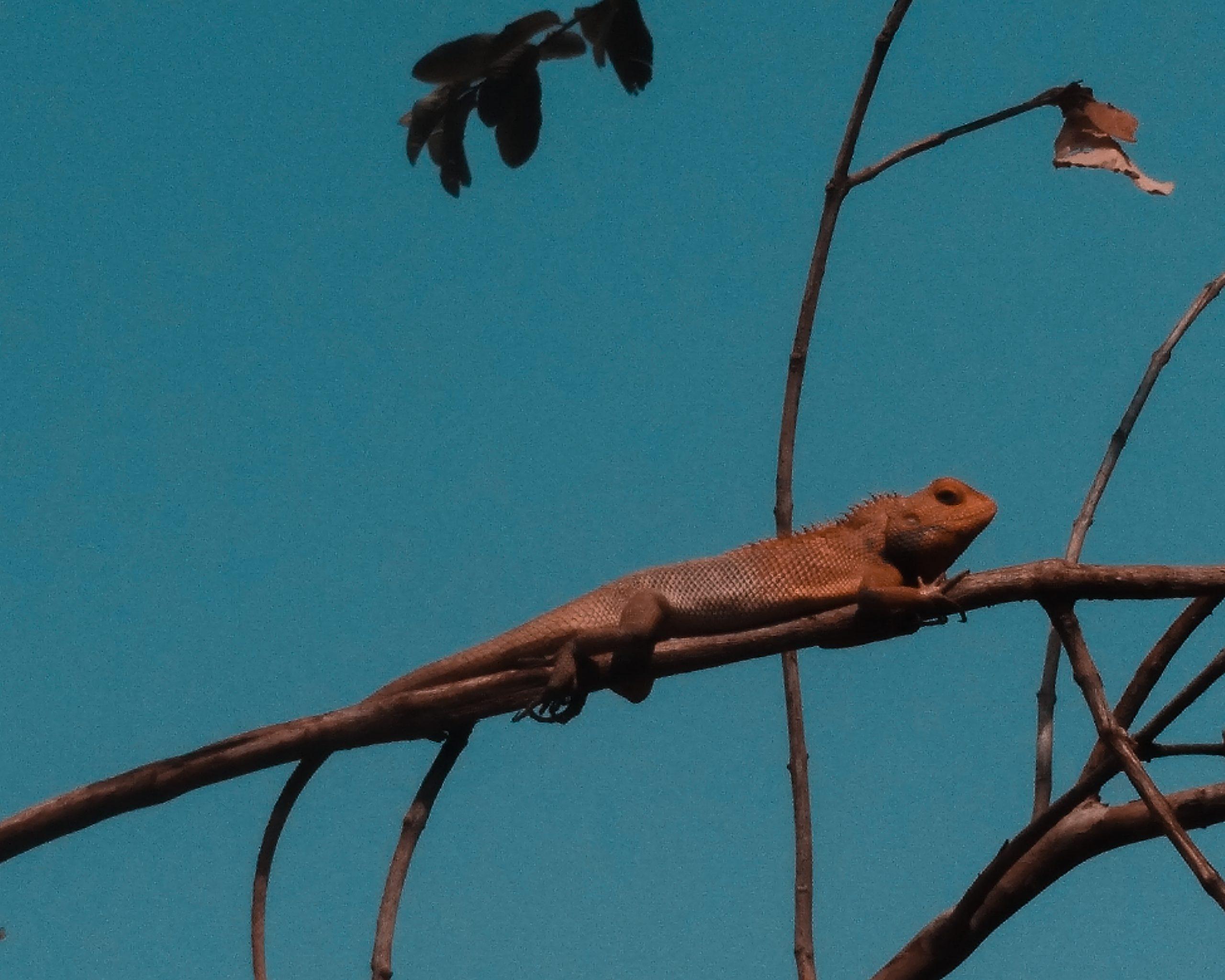 Lizard on the plant stem