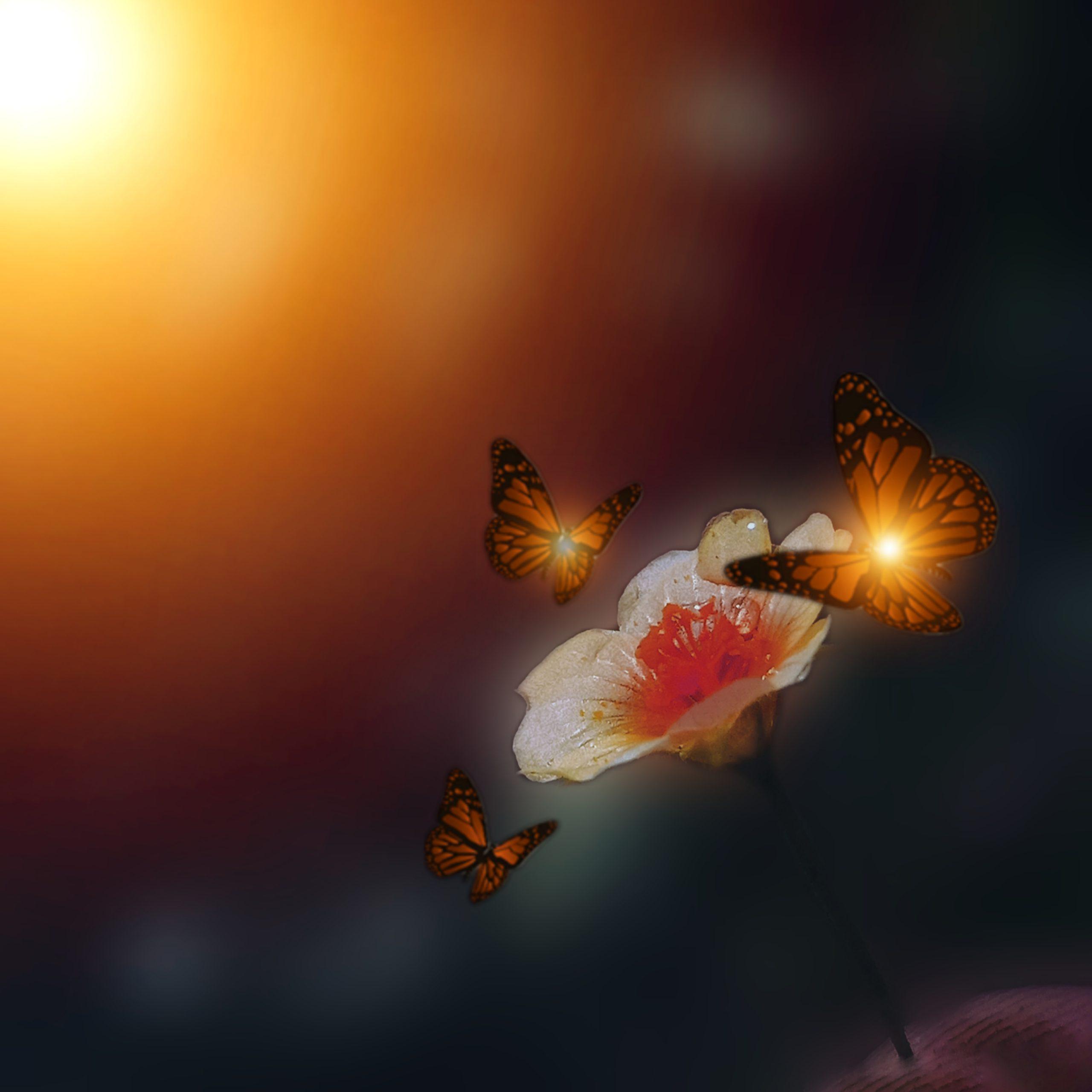 Butterflies around a flower